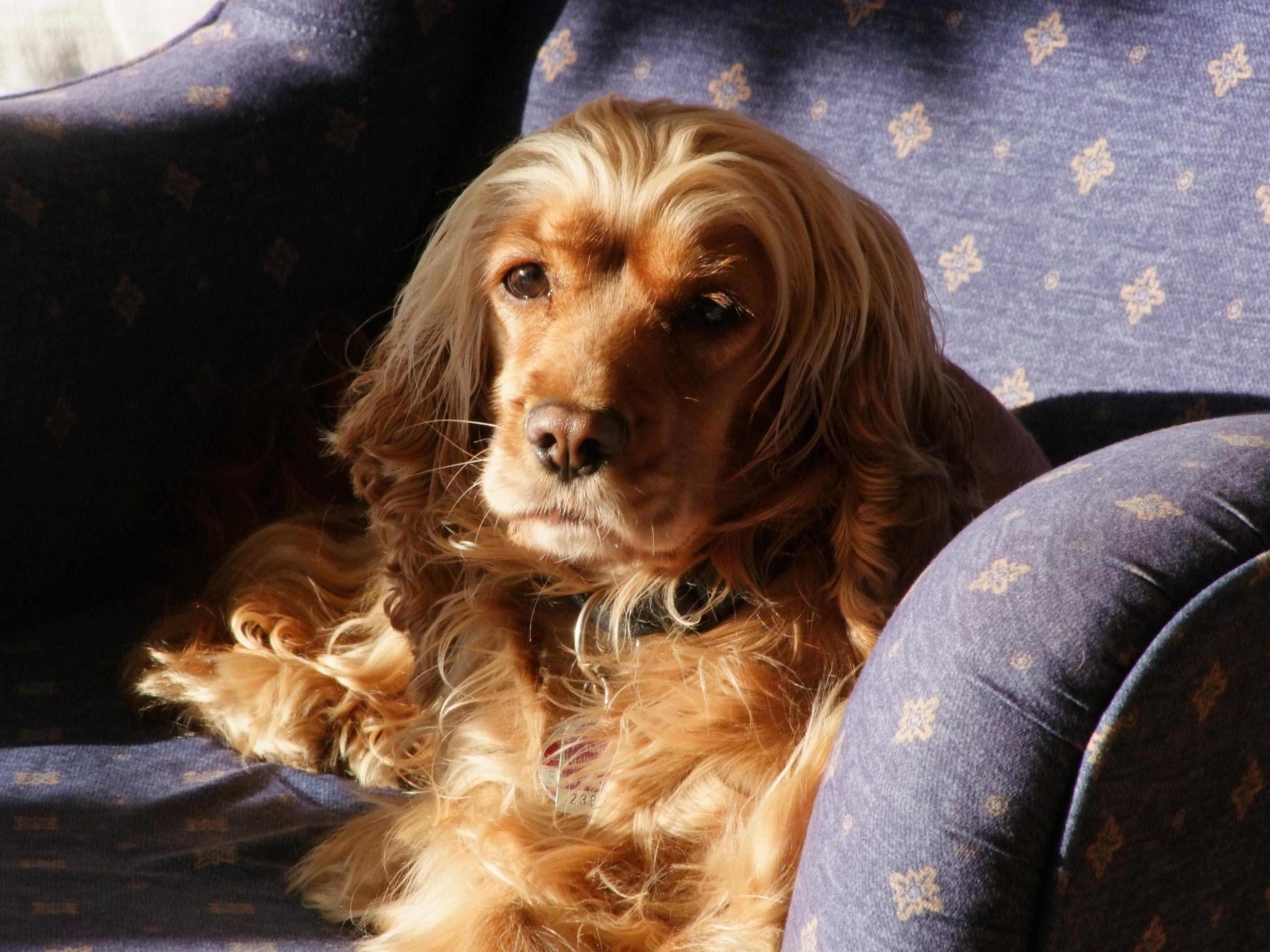собака в кресле картинка необходимые продукты