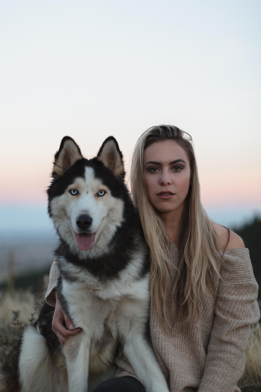 images gratuites vert br chien de traineau husky sib rien malamute d 39 alaska chien comme. Black Bedroom Furniture Sets. Home Design Ideas