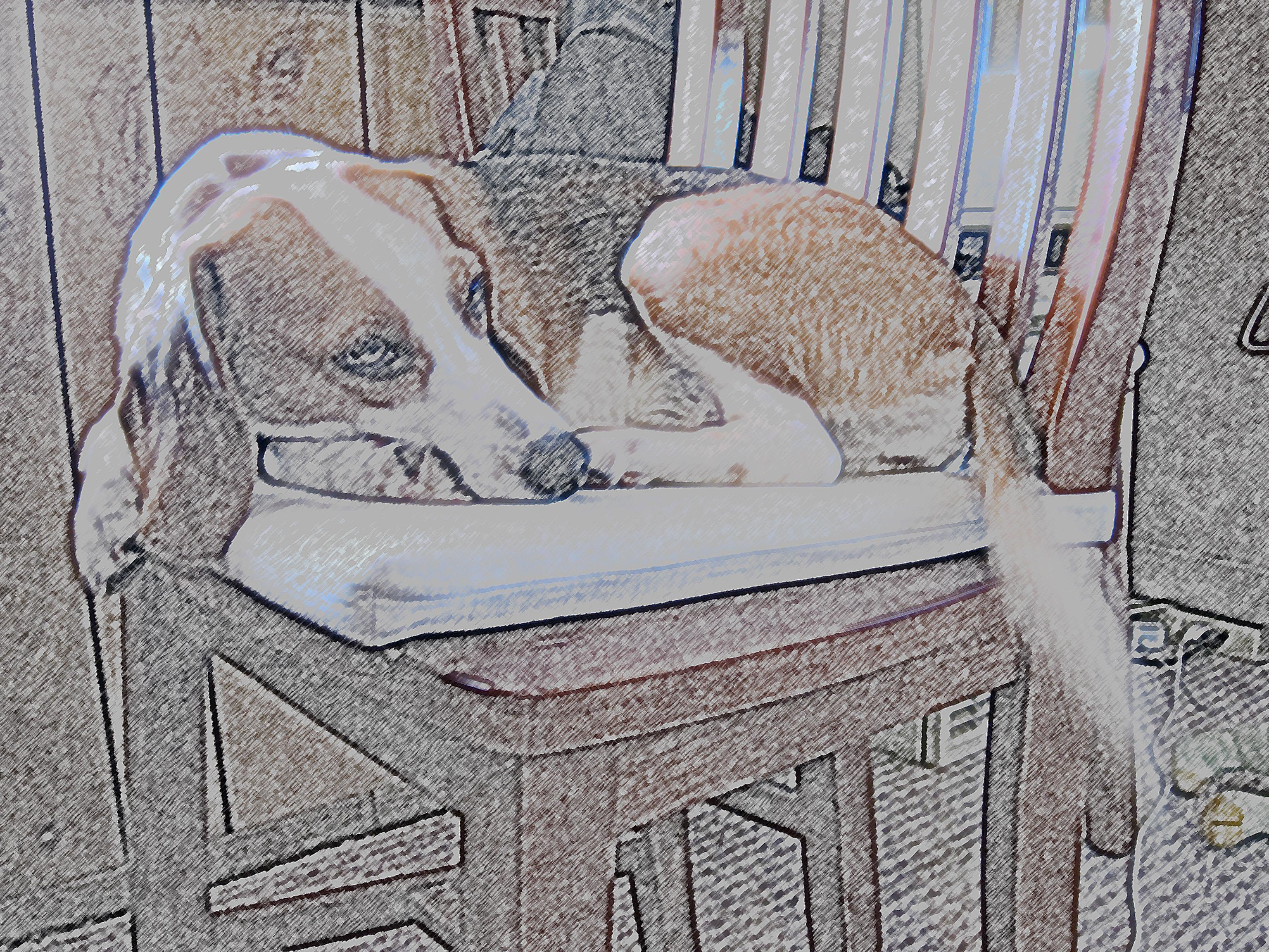 Fotoğraf Köpek Boyama Sanat Eskiz çizim Fresa 3072x2304