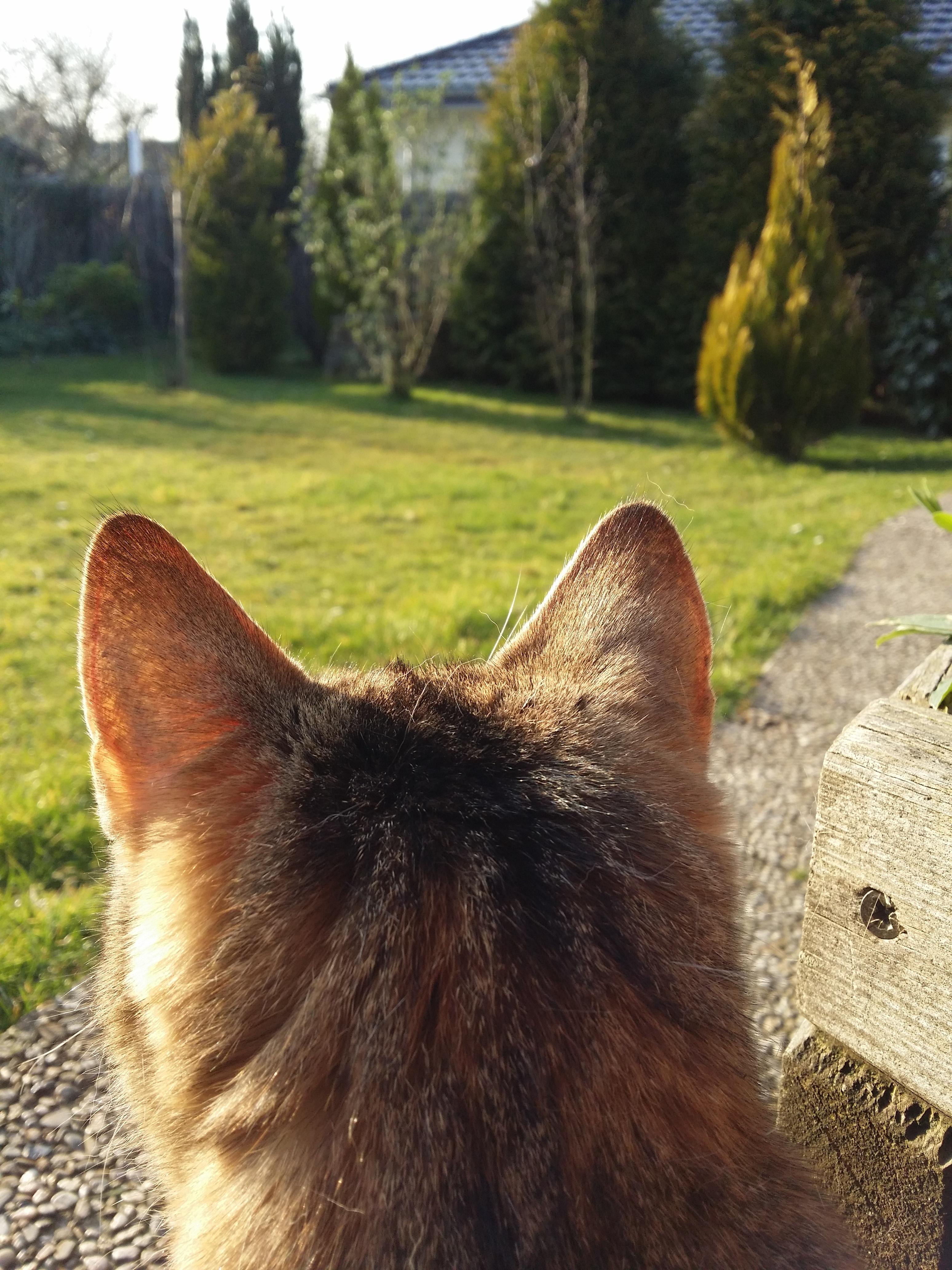 Кот или собака слушать