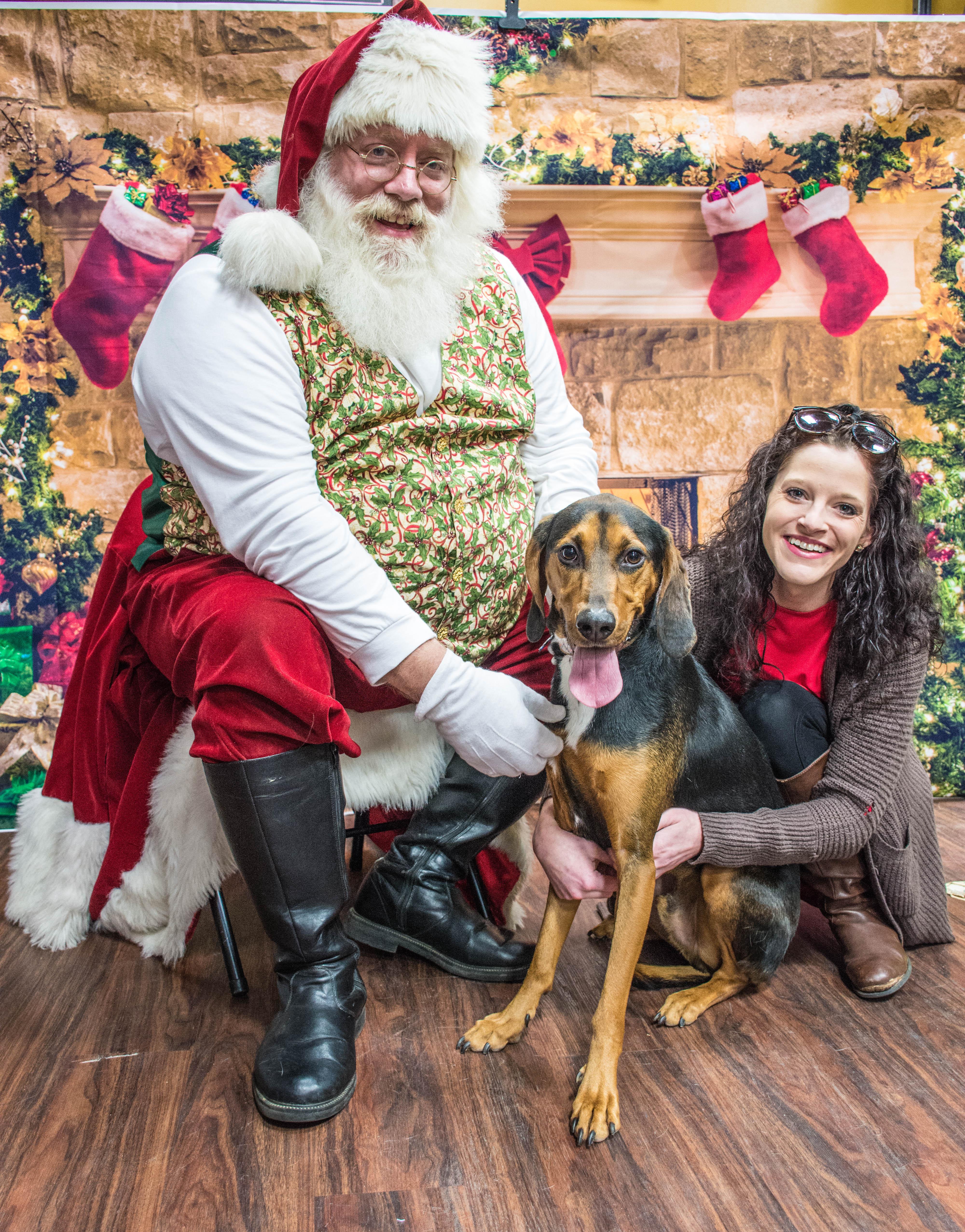 Images Gratuites Pere Noel Adorable Canides Race De Chien