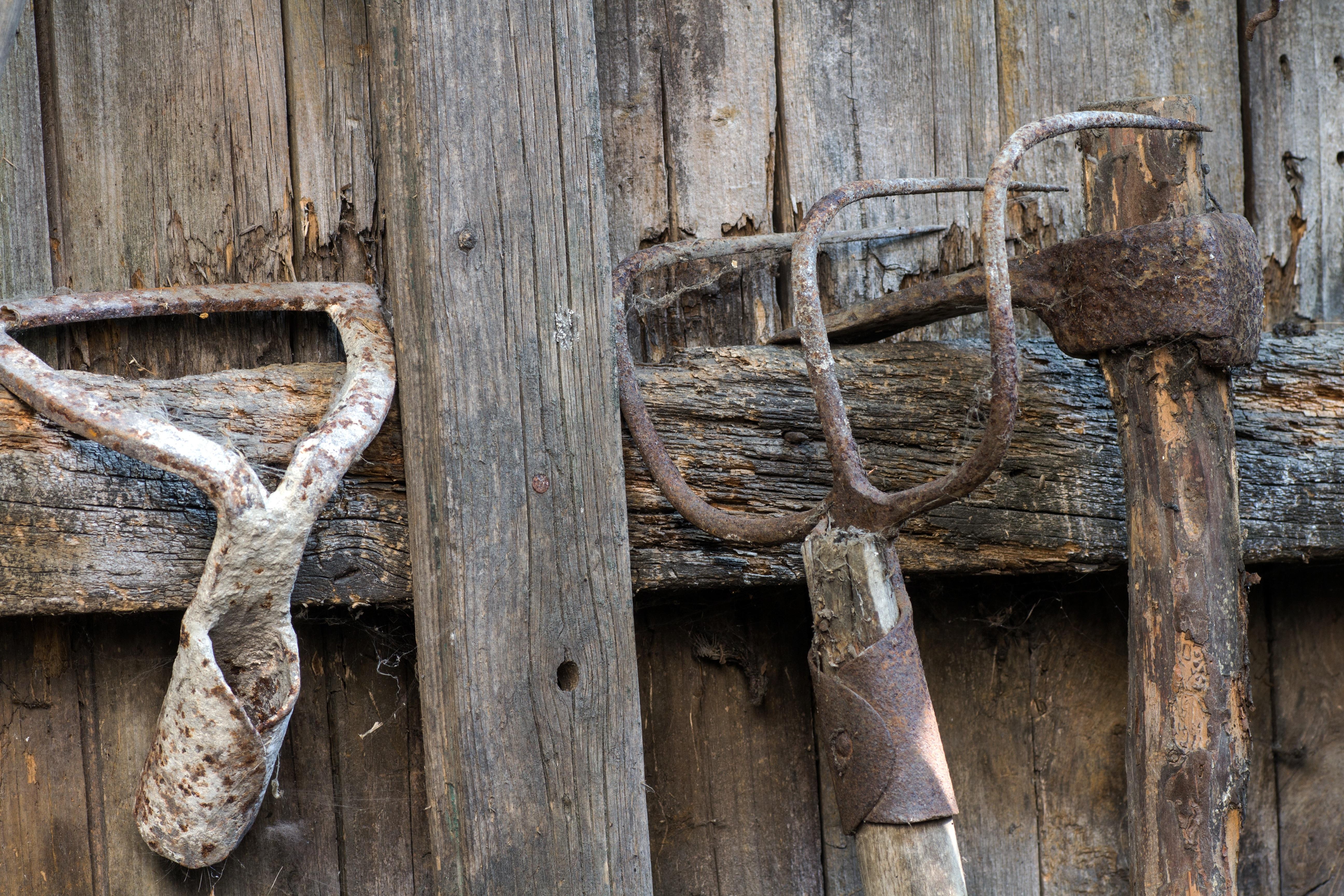 Images Gratuites : bois flotté, branche, tronc, vieux, mur, rustique ...
