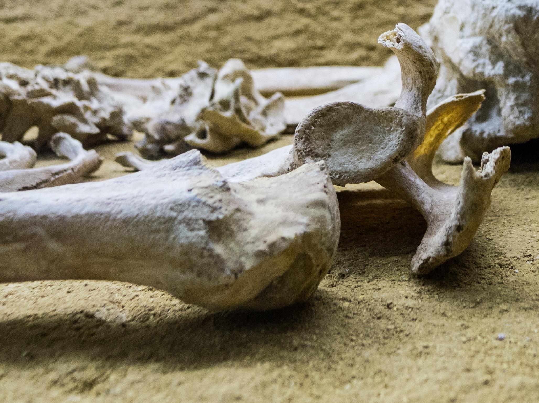 Fotos gratis : Driftwood, arena, madera, cuerno, museo, muerto ...