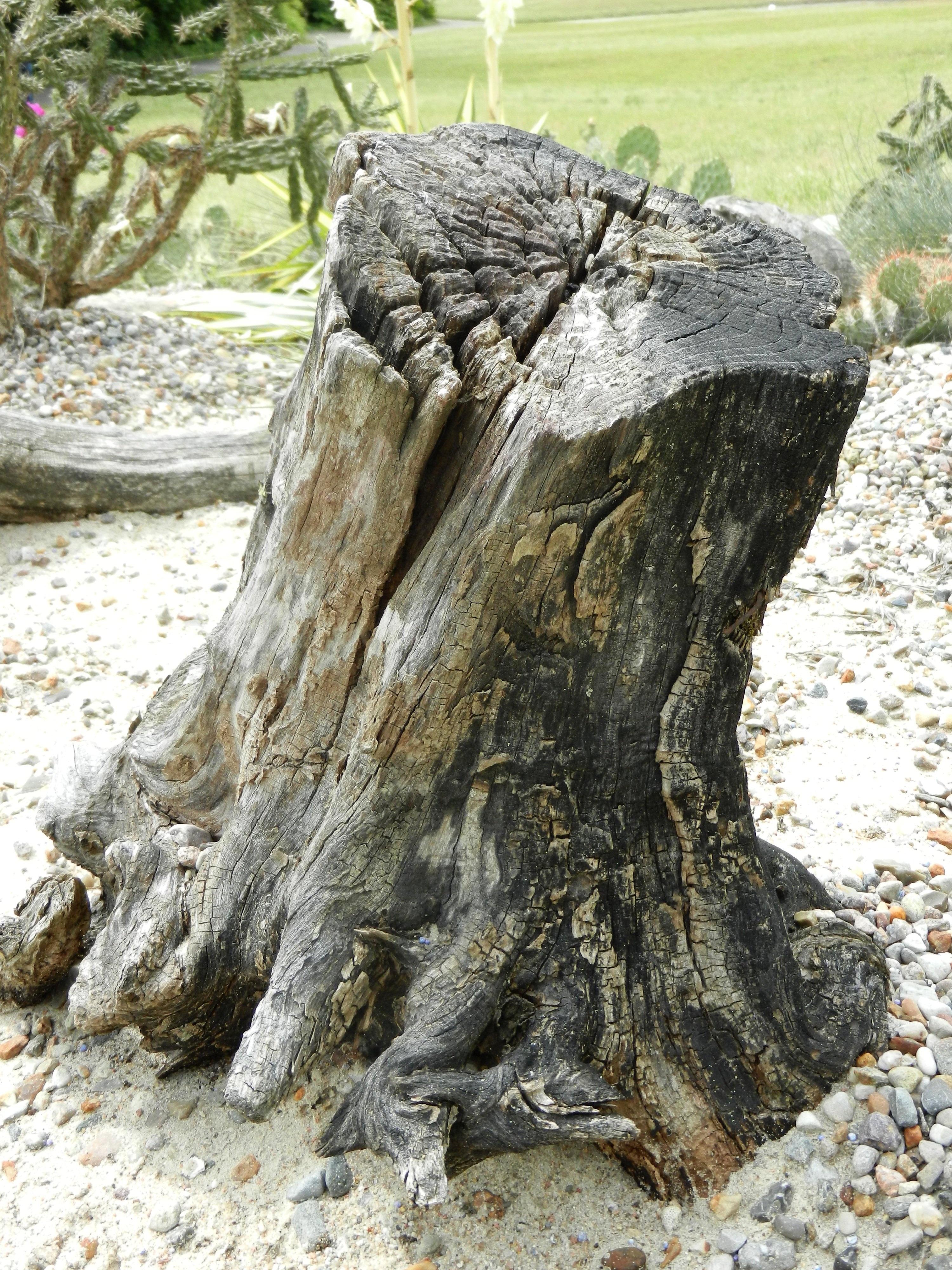 images gratuites bois flott arbre la nature roche plante texture tronc sec vert. Black Bedroom Furniture Sets. Home Design Ideas