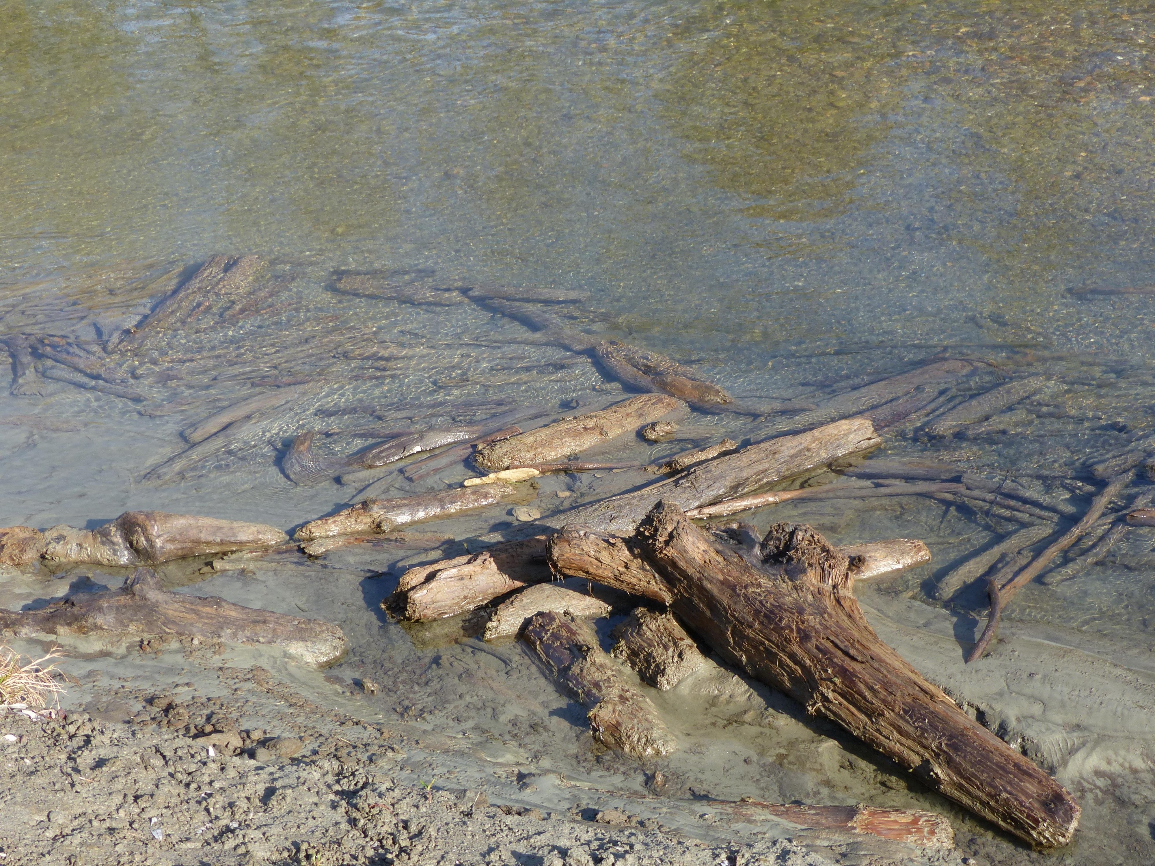 могут находки на берегу реки фото прошедшие годы