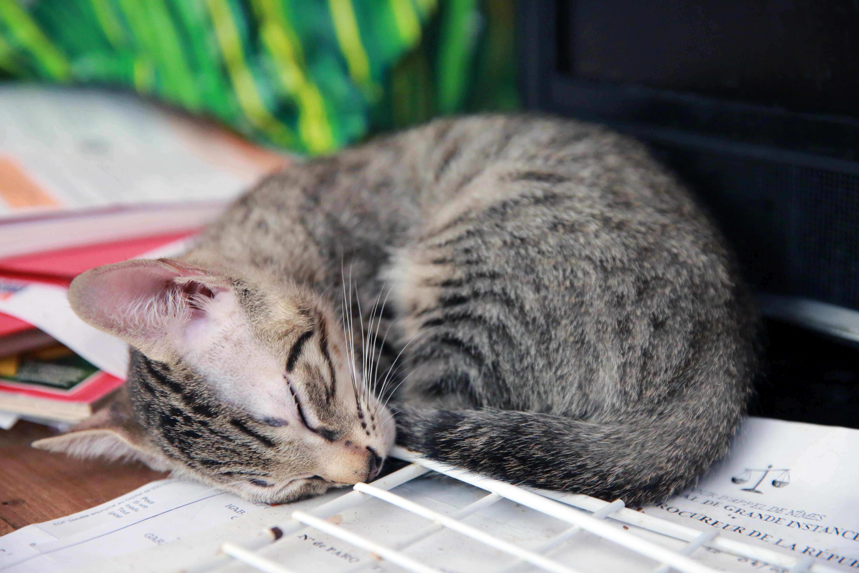 lesbienne chatte fermerfait maison webcam pipe
