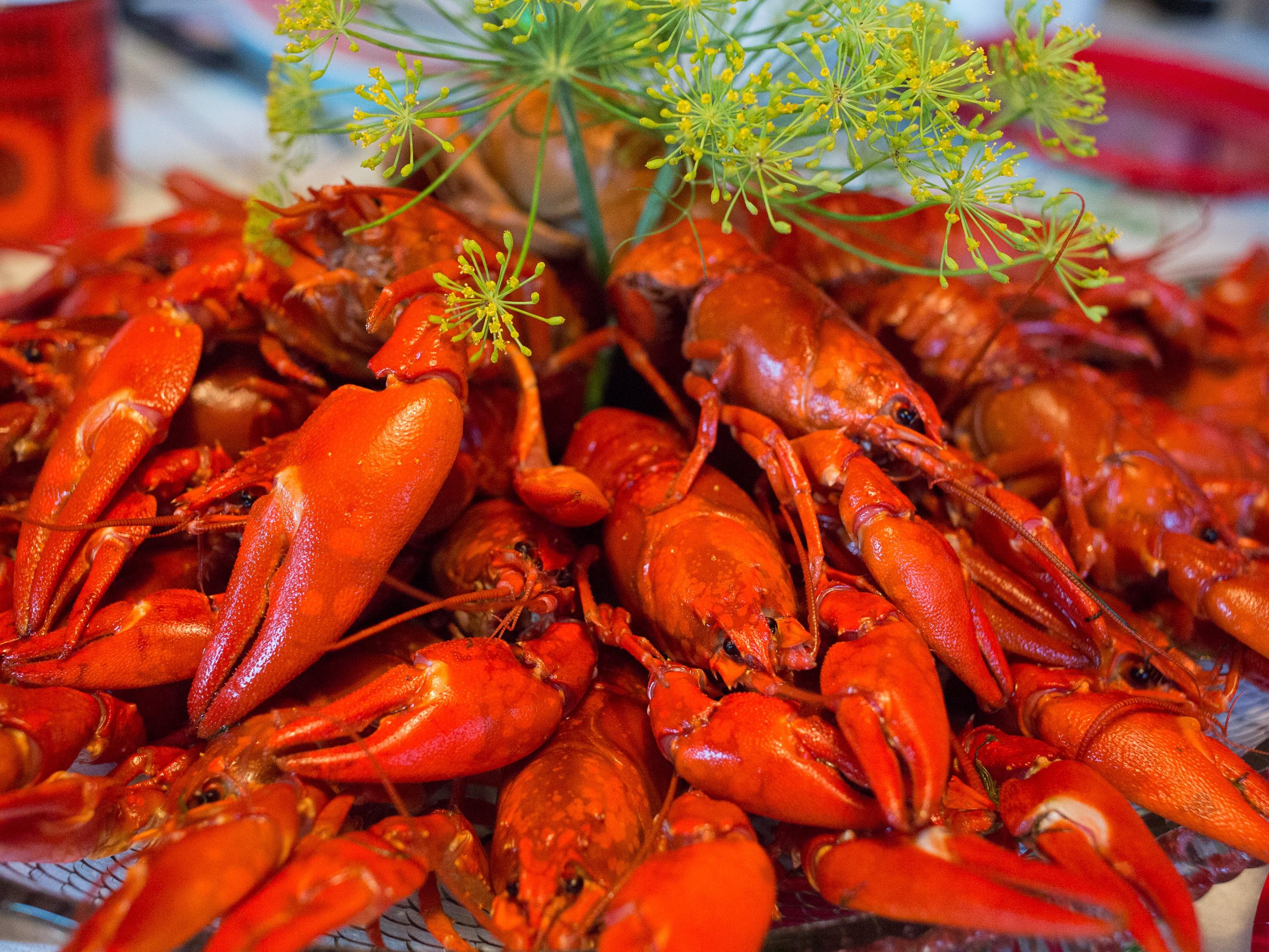 Free Images : fall, food, produce, fish, invertebrate, crustacean, dinner, crabs, crayfish ...