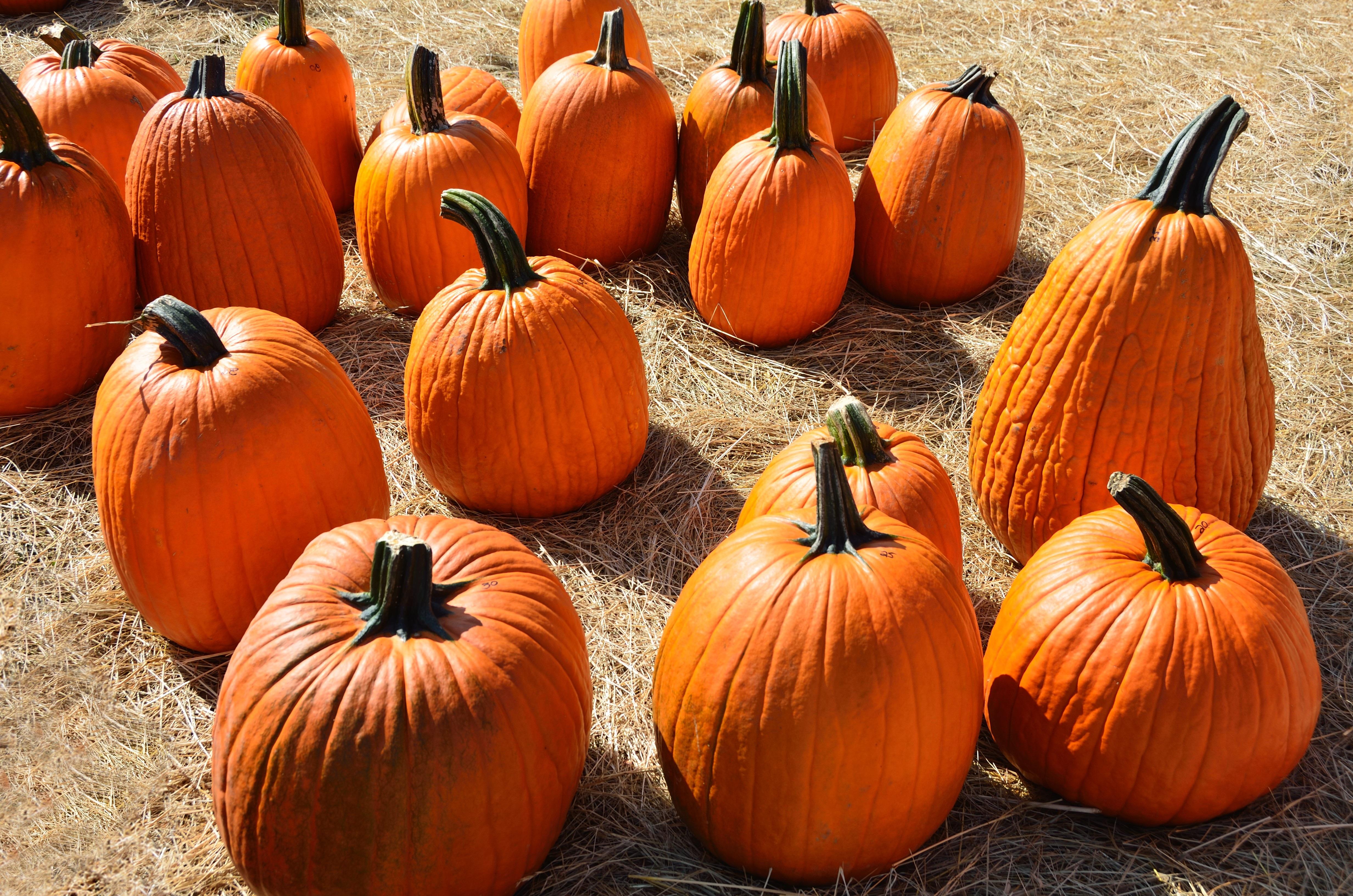 free images fall spooky celebration orange harvest produce