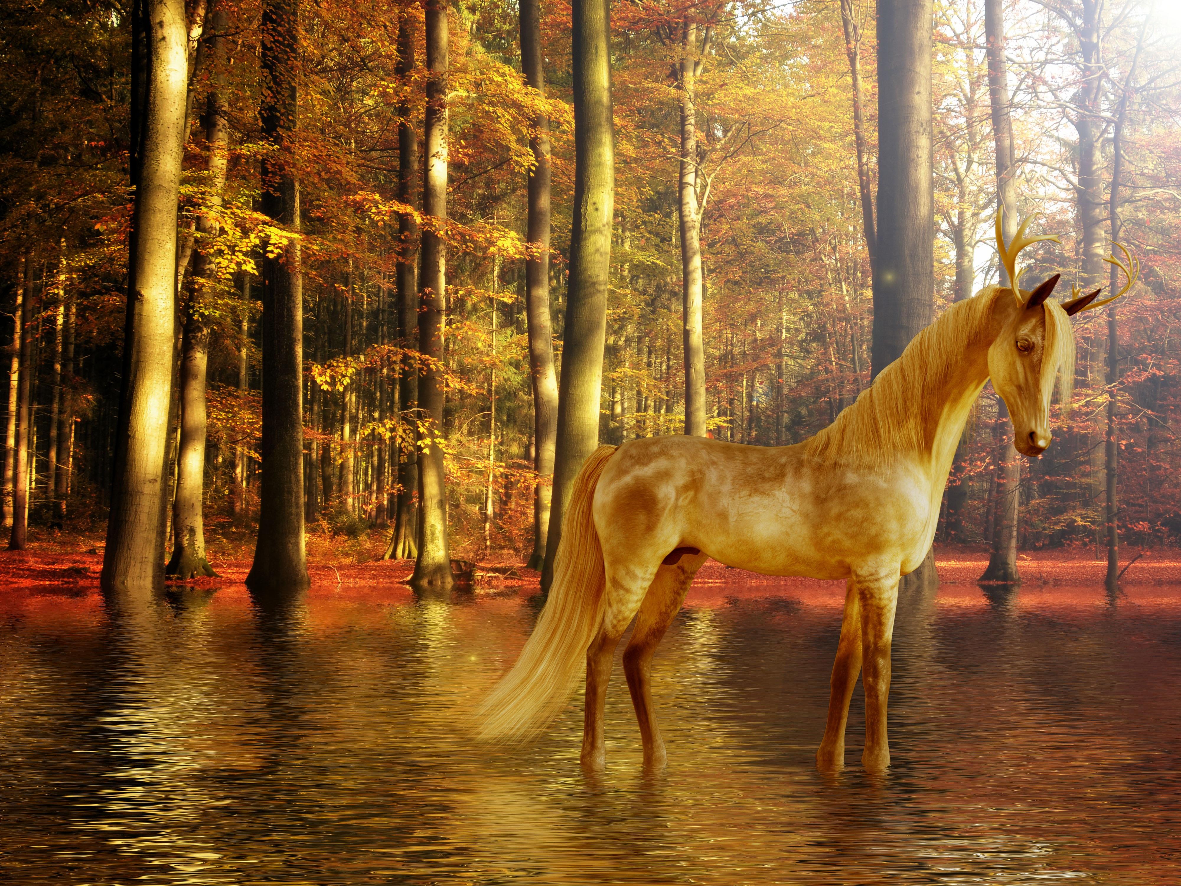 Free Images Fantasy Water Design Unicorn Nature Horse Like