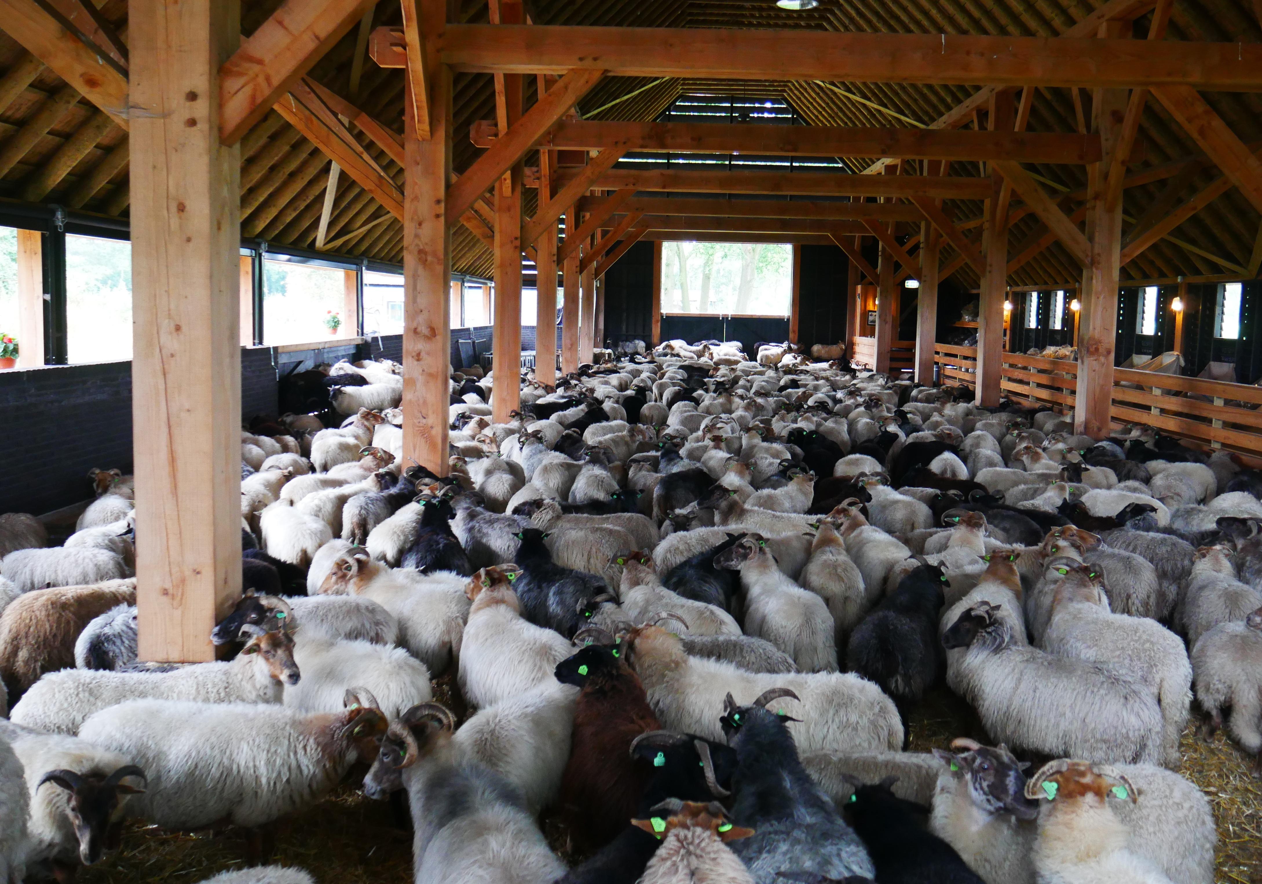 Images gratuites ferme campagne grange animal marron - Photos de moutons gratuites ...