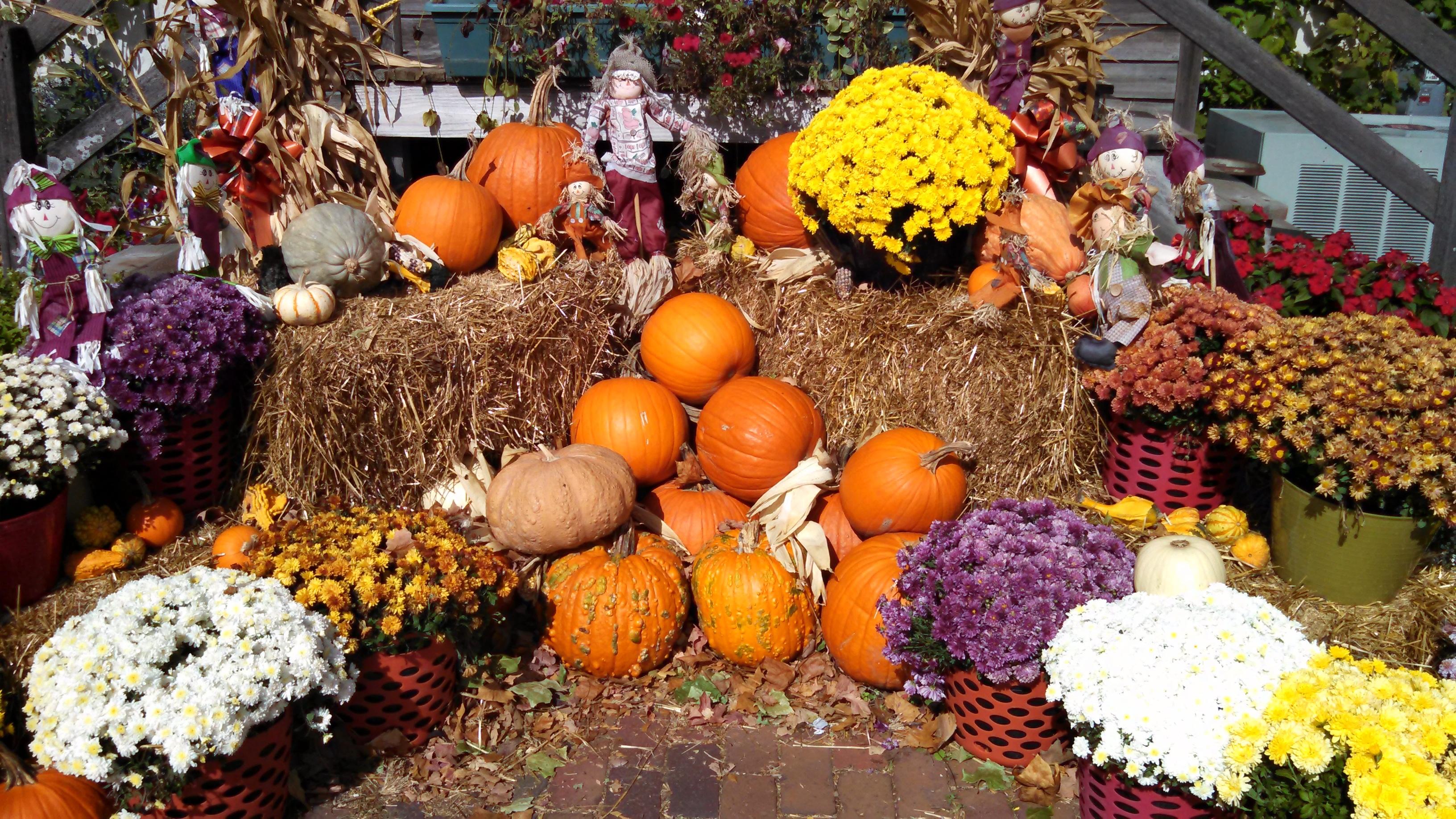 Fotos gratis : granja, campo, otoño, flor, ciudad, país, comida ...