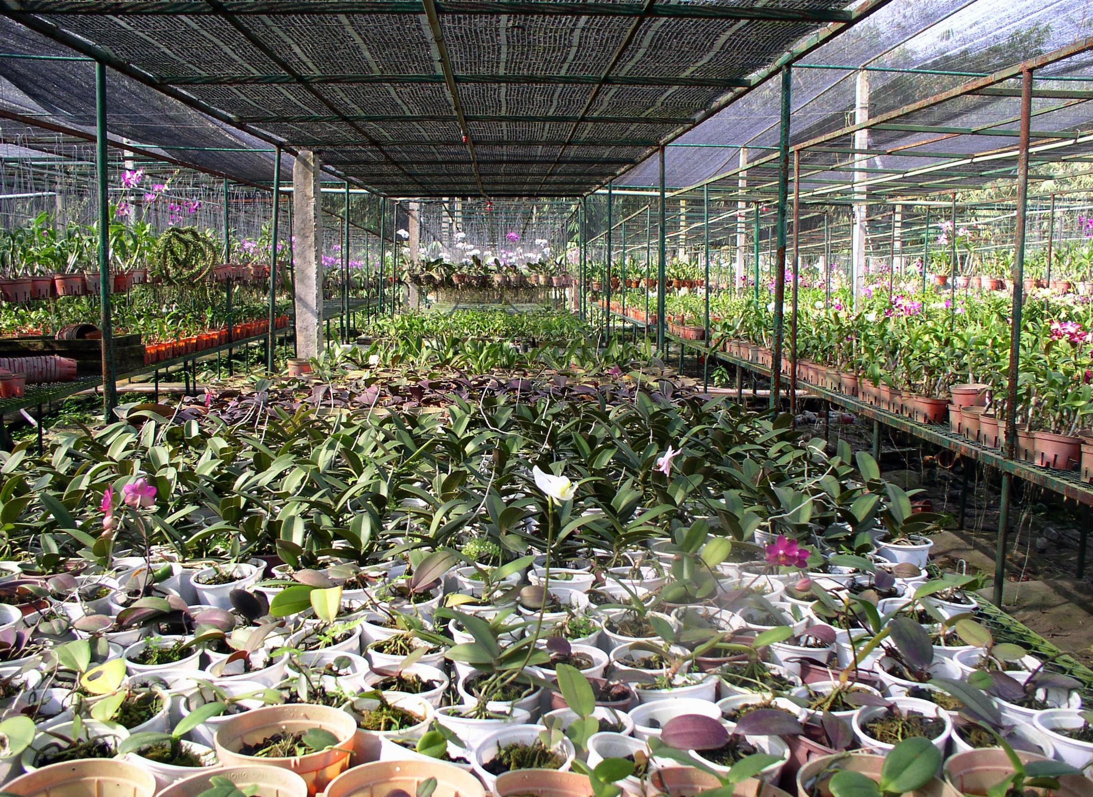 images gratuites : ferme, fleur, outil, environnement, produire