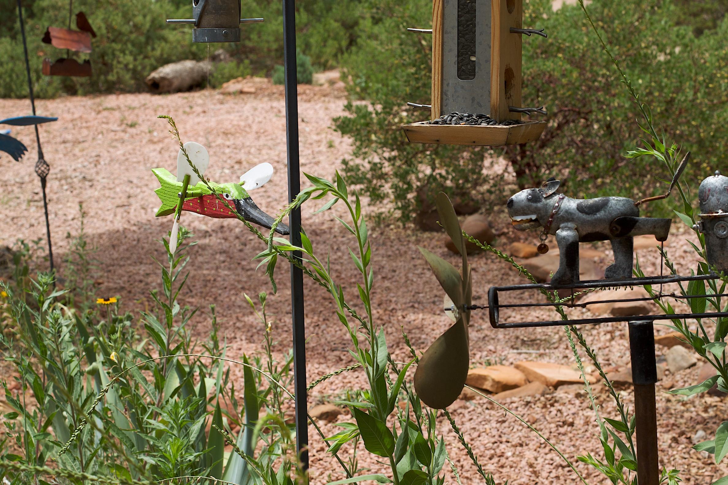 Free Images : farm, flower, wildlife, backyard, soil, garden, spike ...