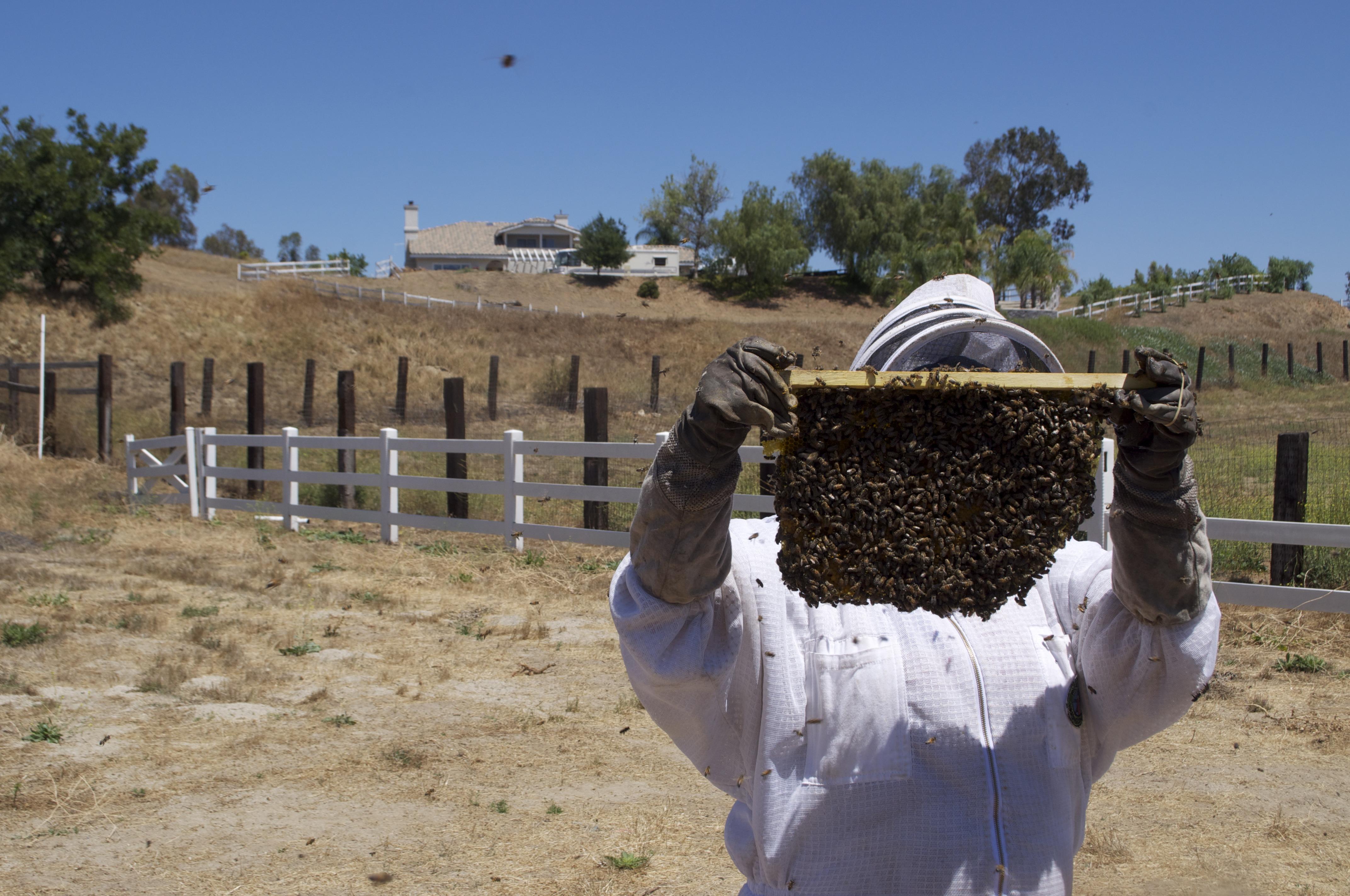 Fotos gratis : granja, insecto, agricultura, apicultor, entomología ...