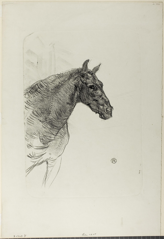Gambar Fauna Gambar Sketsa Karya Seni Ilustrasi Seni