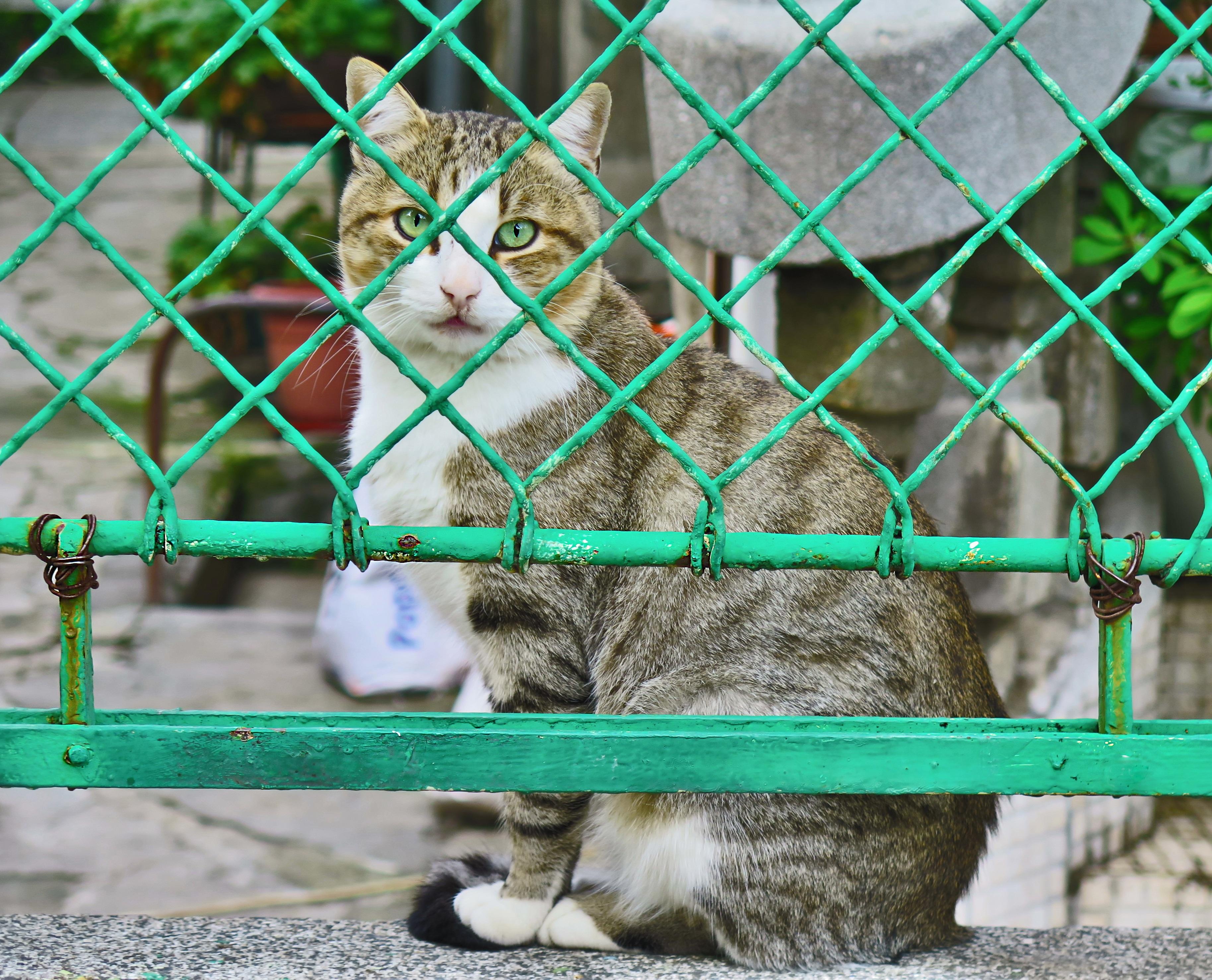 Free Images : fence, zoo, pet, fur, portrait, kitten, mammal, fauna ...