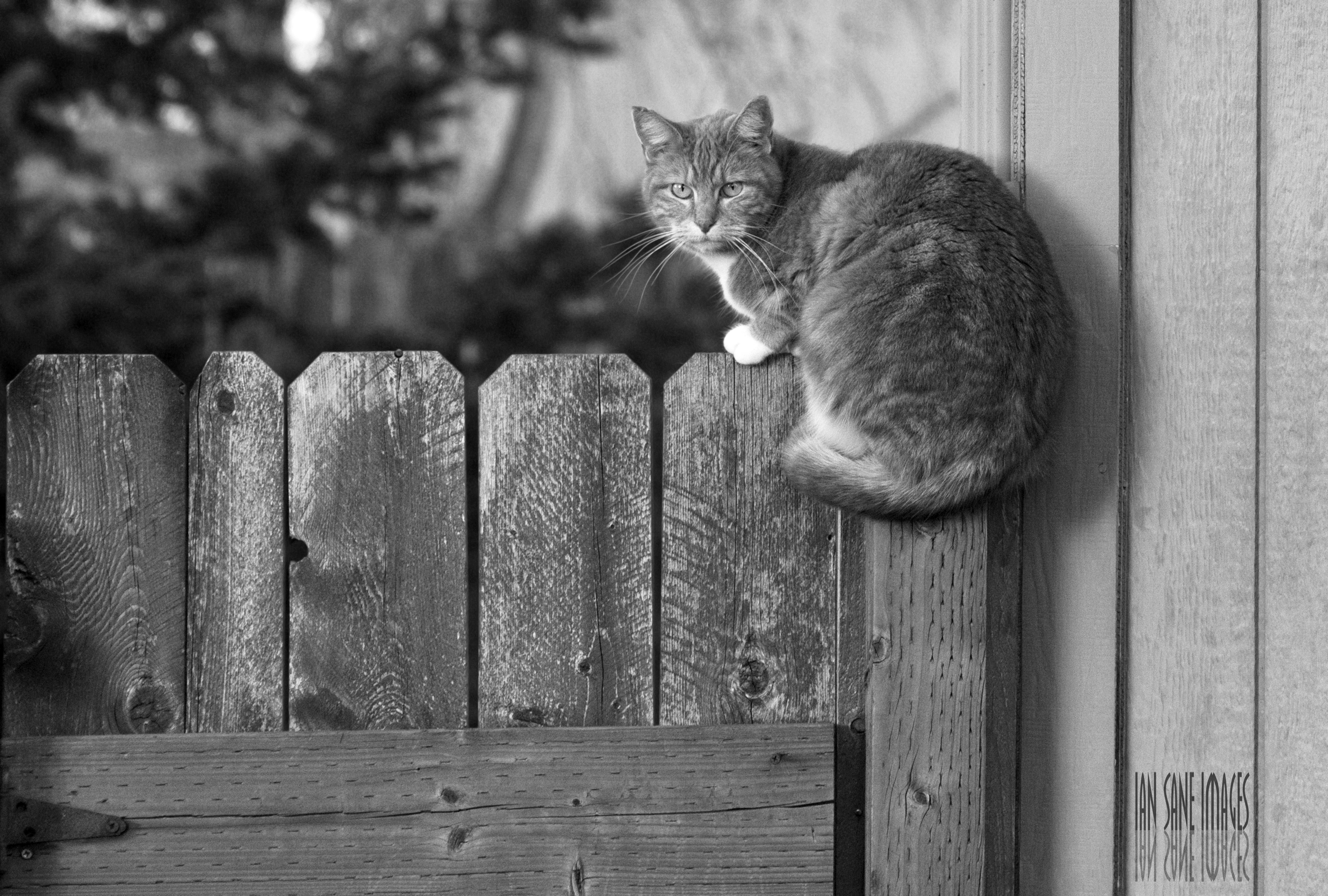 9721123794 Fotos gratis : cerca, en blanco y negro, cámara, fotografía, barrio,  naranja, gatito, gato, lente, canon, felino, atigrado, monocromo, bigotes,  Eos, es, un, ...