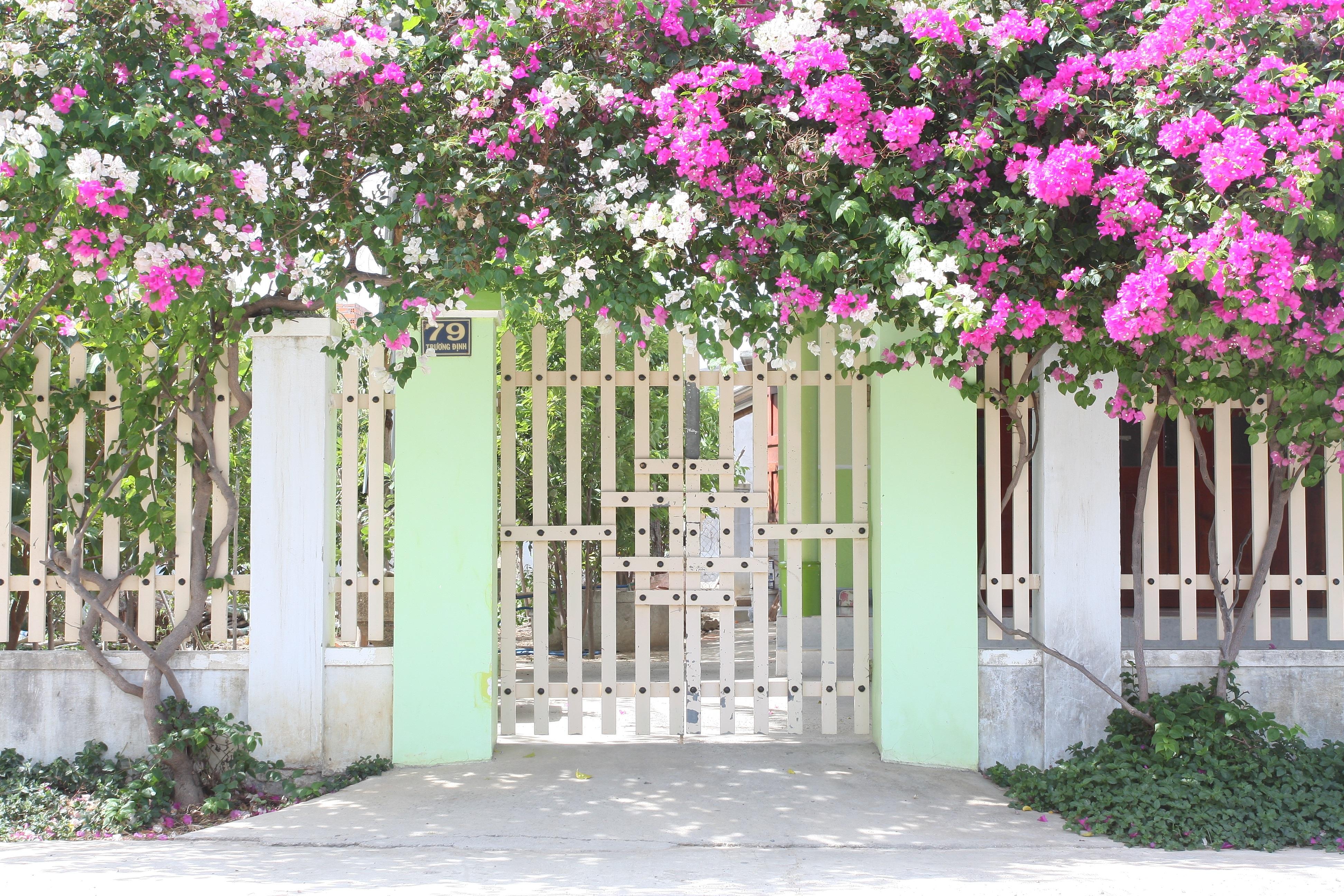 Забор и цветы фото