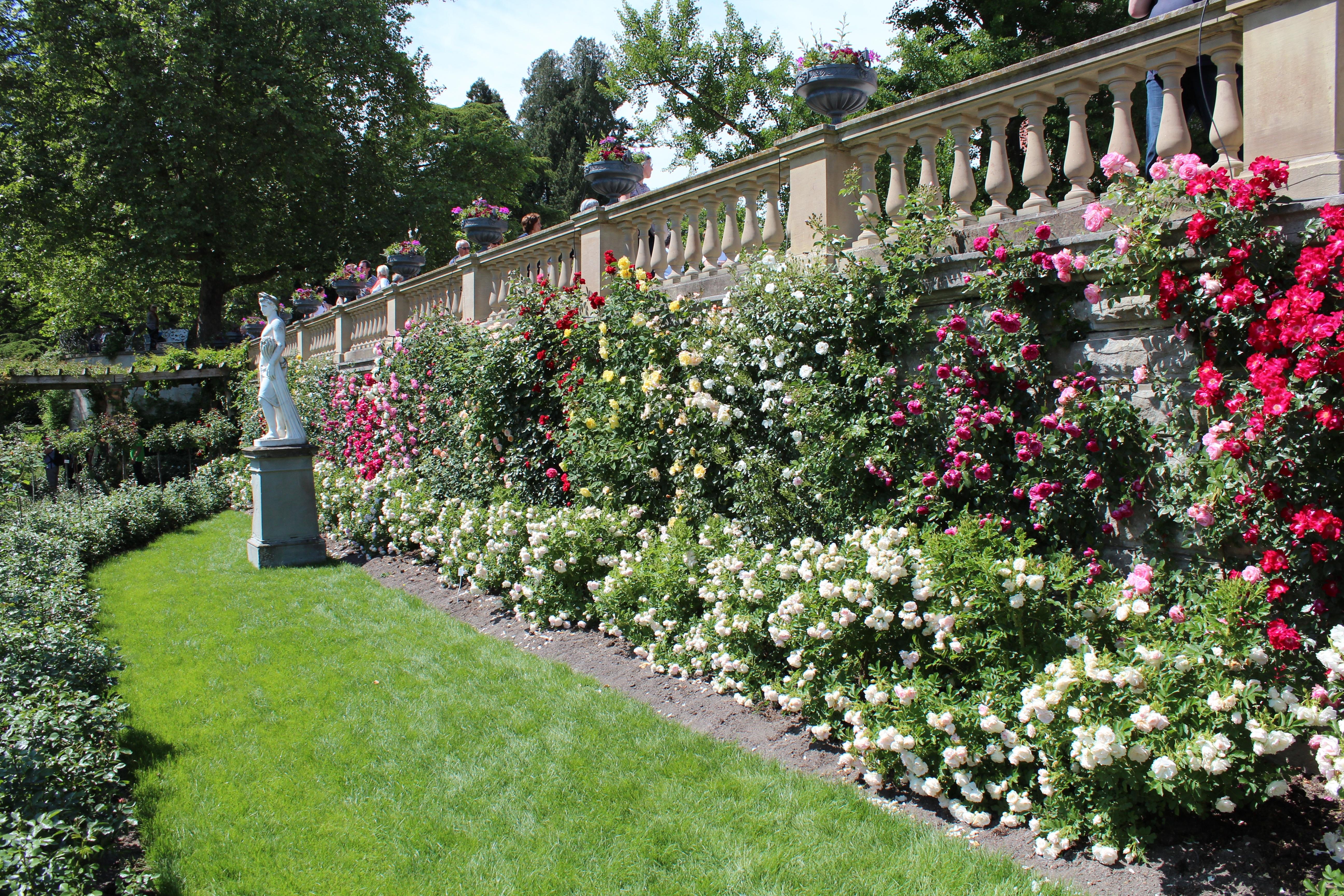 Фото живой изгороди из цветов