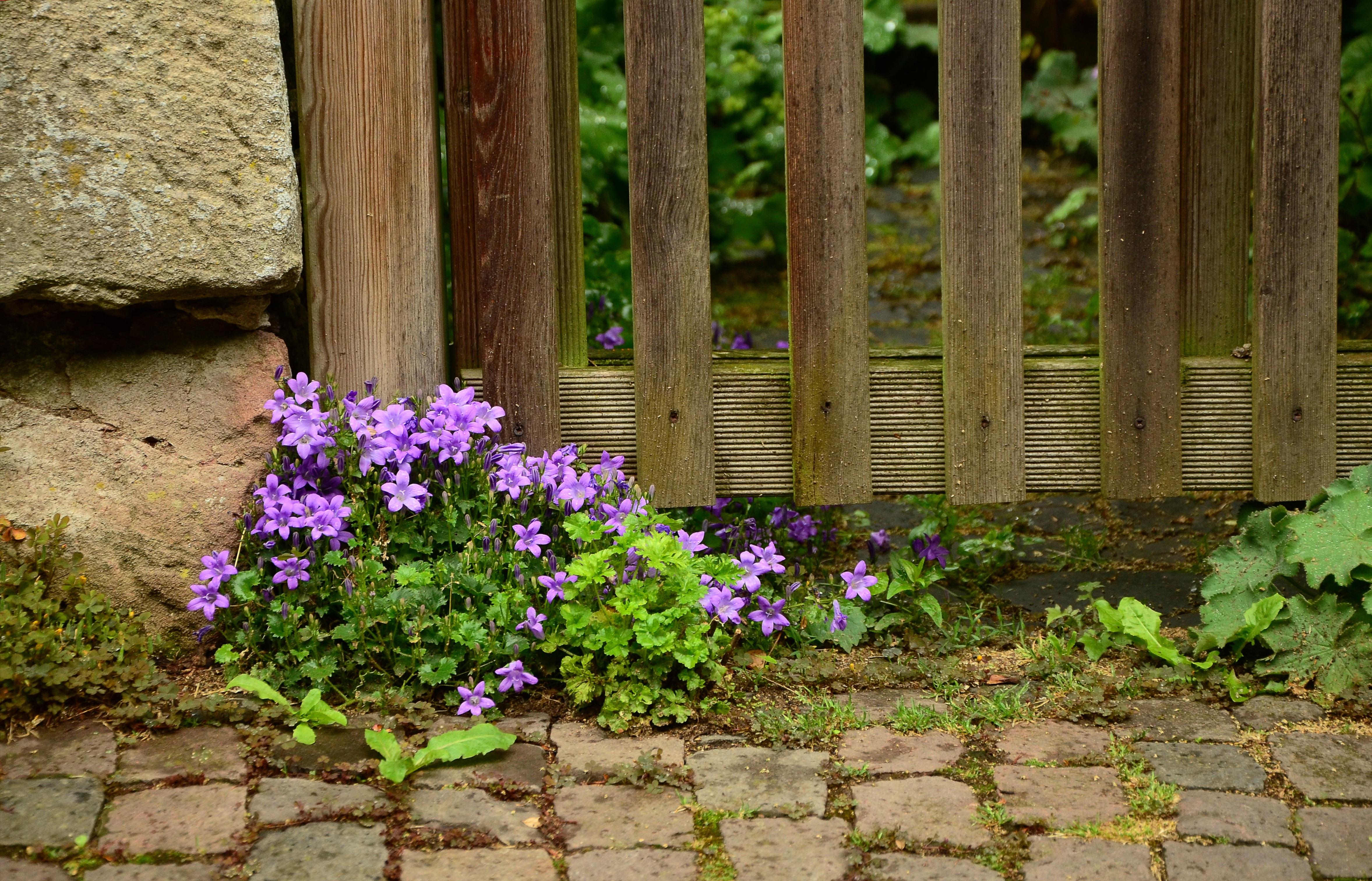 Free Images : plant, lawn, bloom, wall, walkway, summer, idyllic ...
