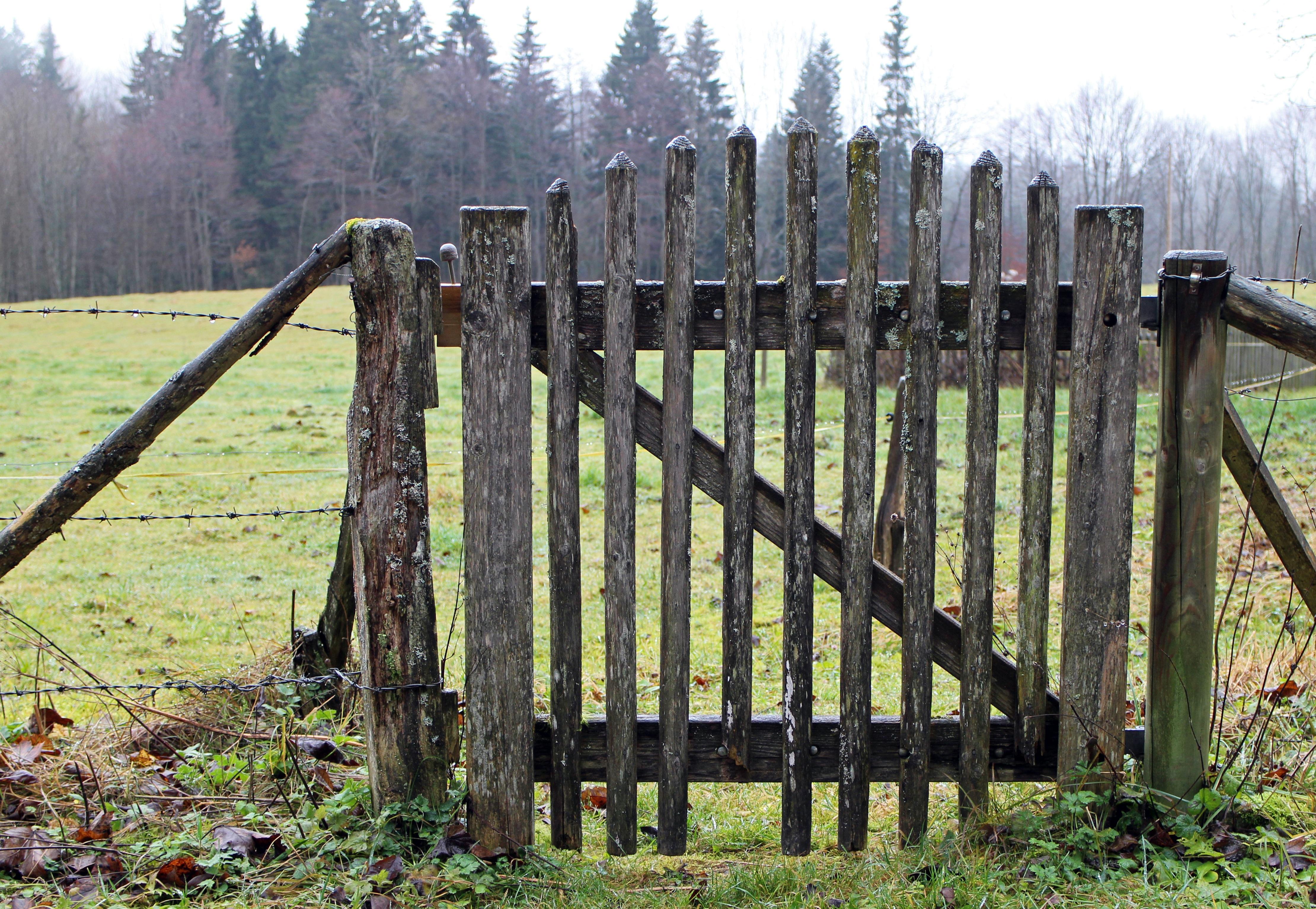 Kostenlose foto Holz Wiese Weide Tor Tür Lattenzaun