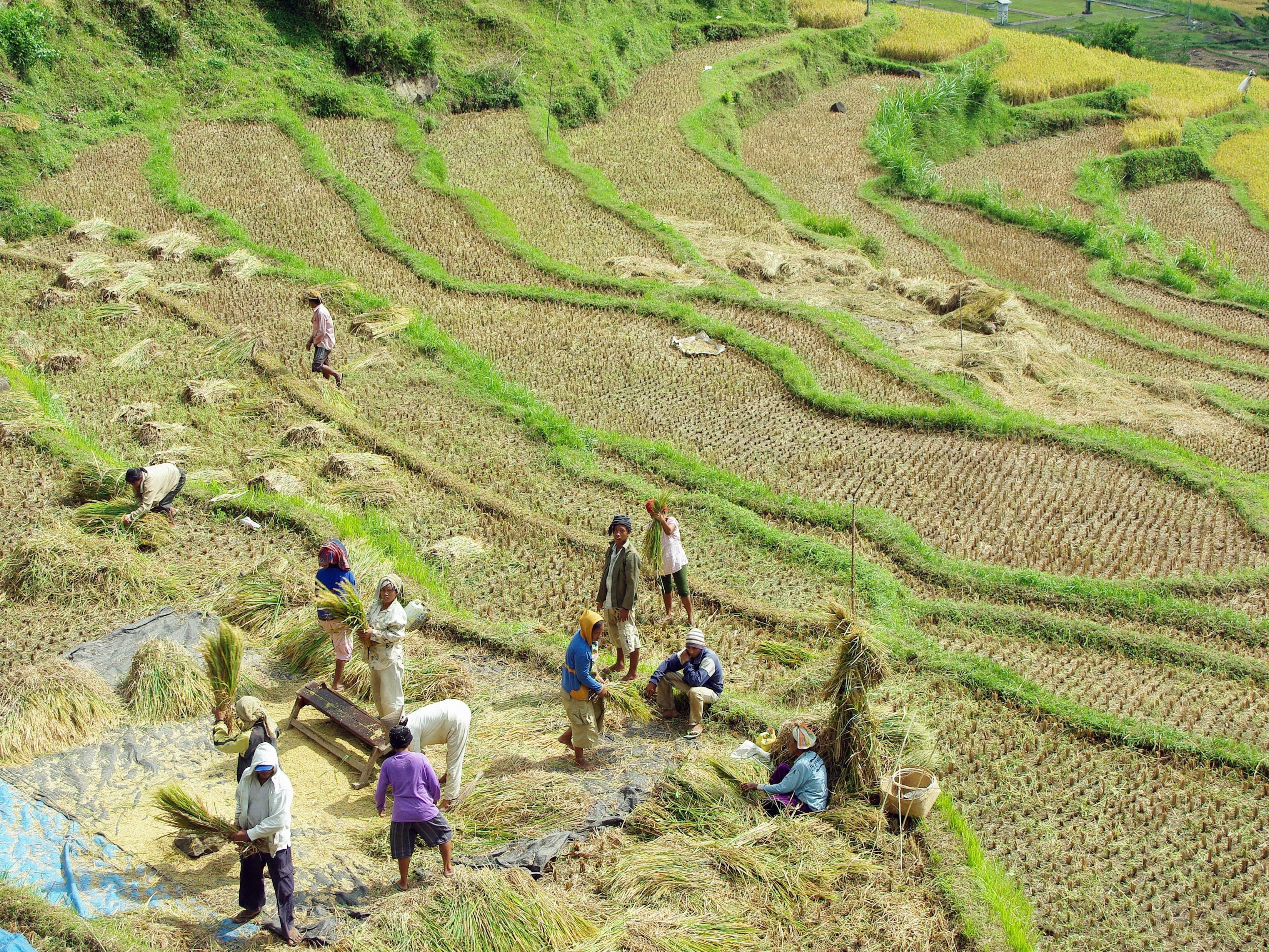 Fotos Gratis Cultivo Suelo Agricultura Llanura Terraza