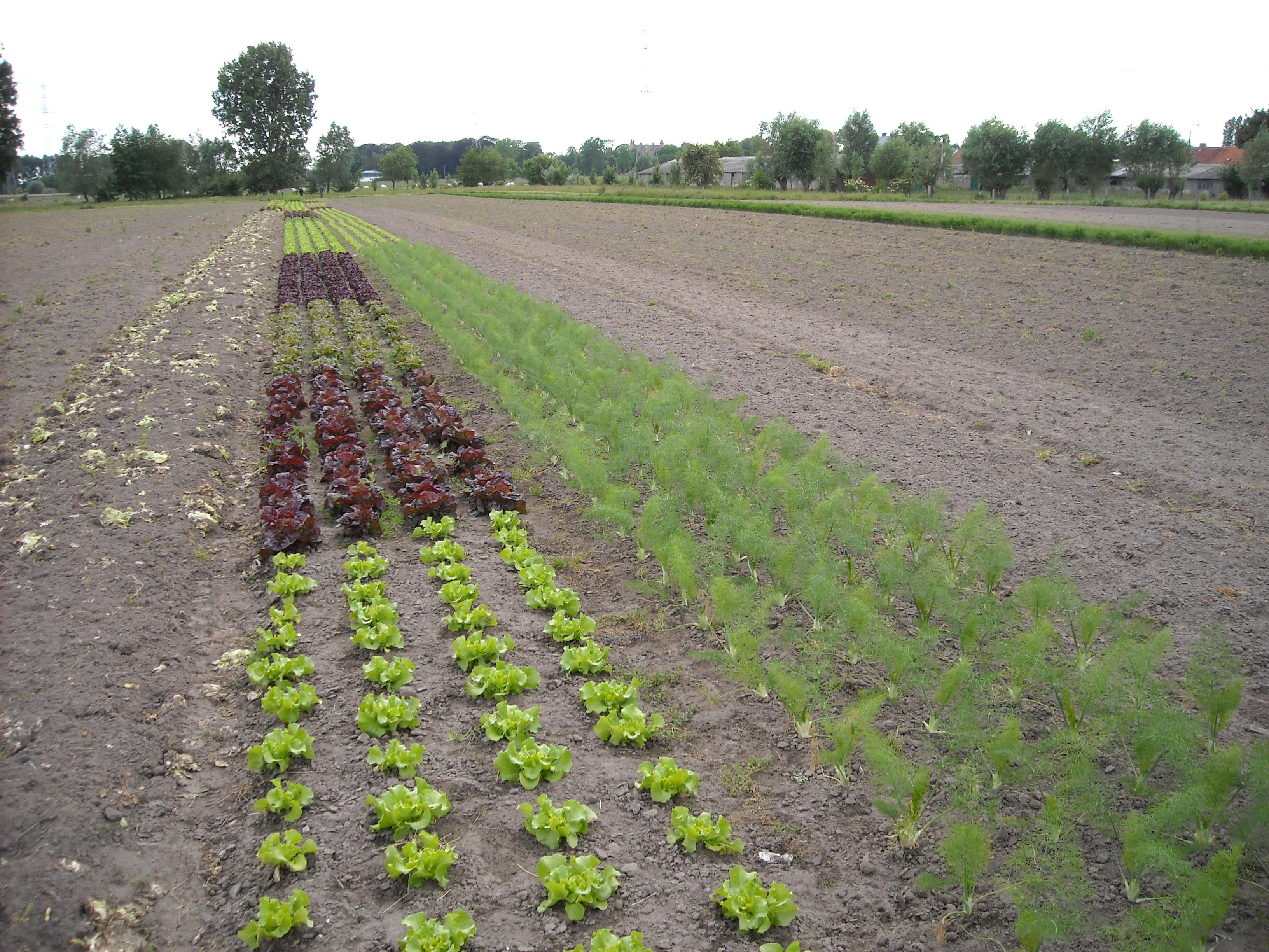 Бизнес по выращиванию овощей - бизнес-план, как начать с нуля 11