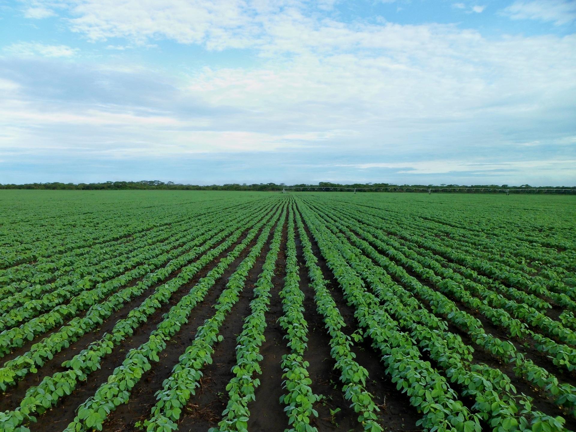 Free Images : farm, flower, green, farming, crop, soil ...