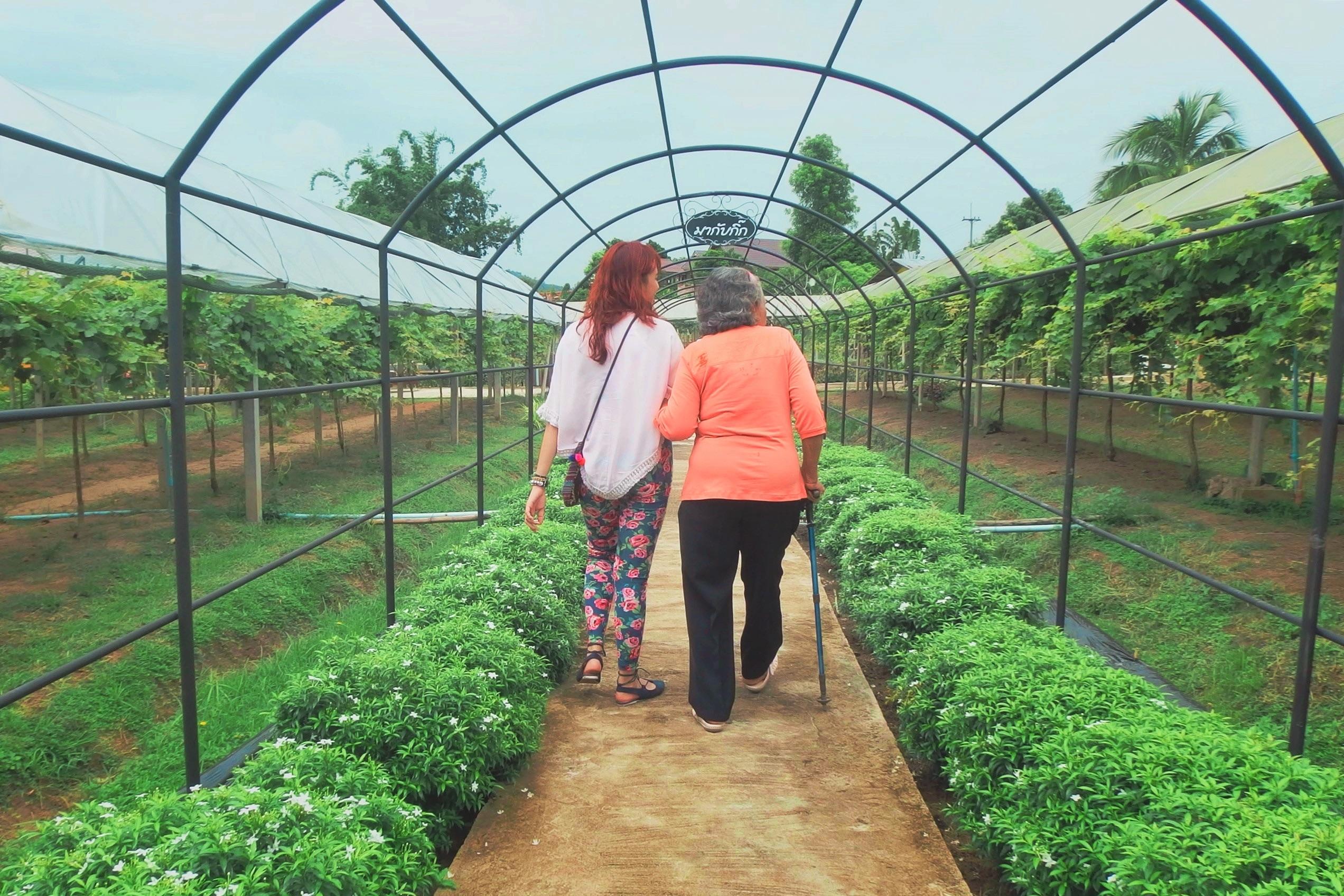 Fotos gratis : campo, granja, flor, herramienta, suelo, agricultura ...