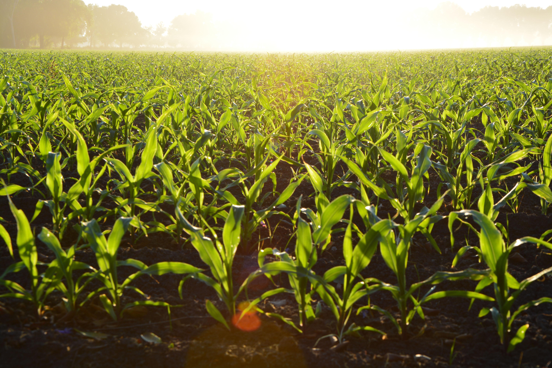 Organic Food Background Images