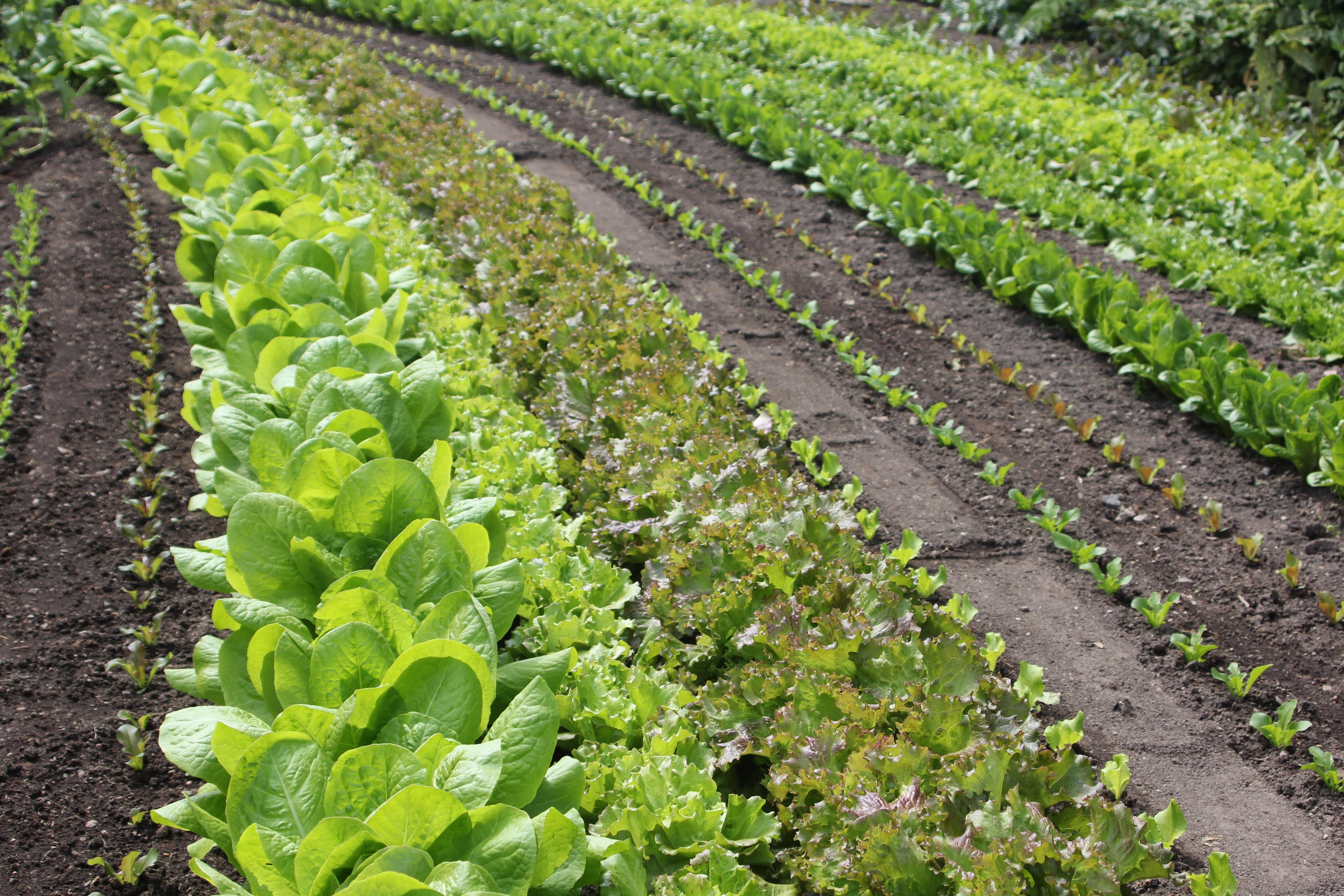 Чудо овощи поделки своими руками с фото