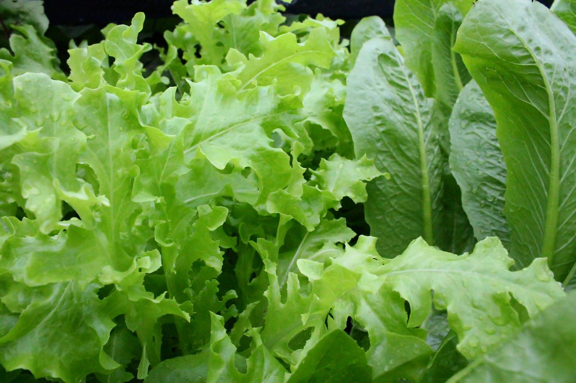 Is Organic Healthy Food