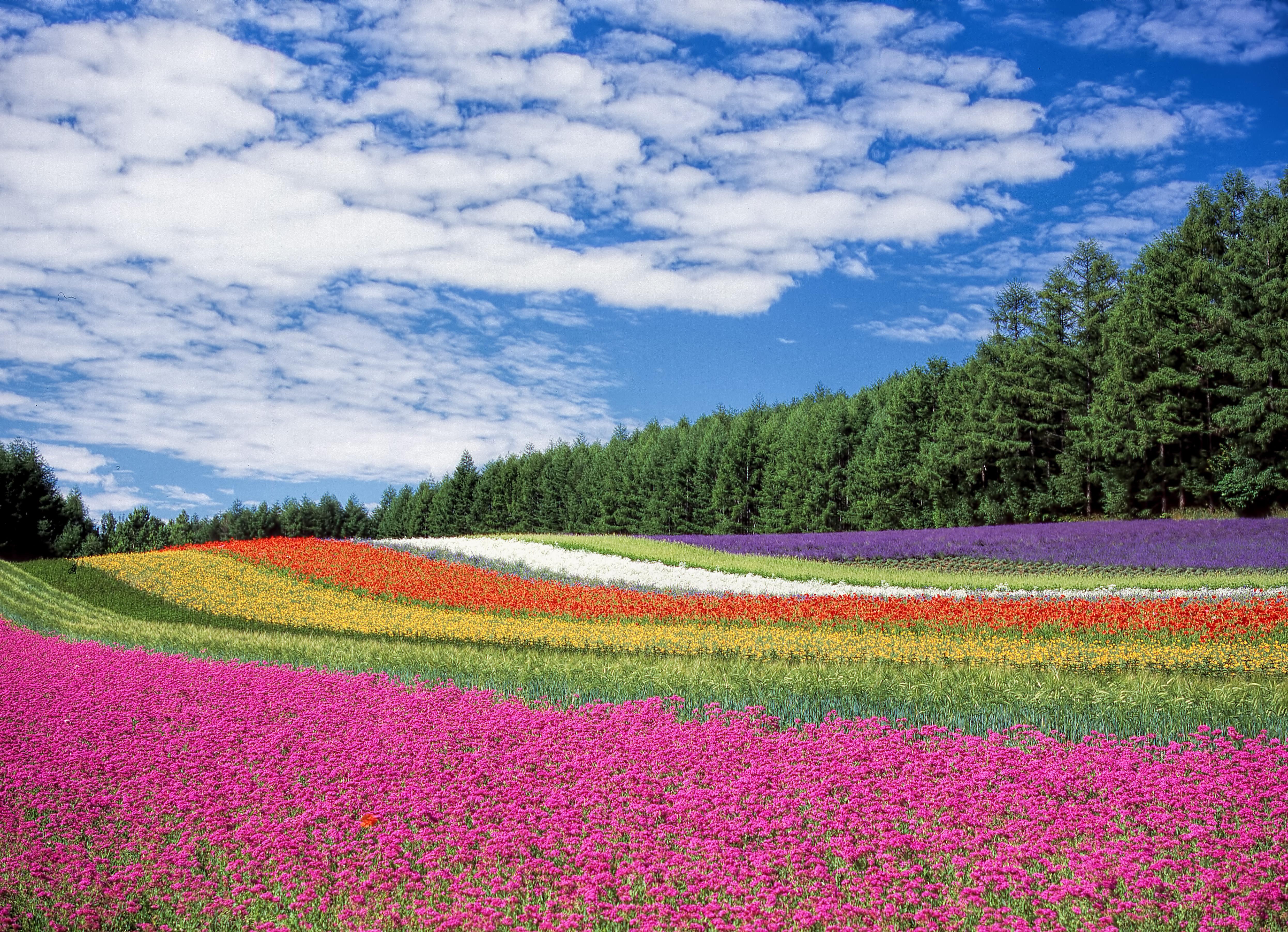 Картинки красивых цветочных полей