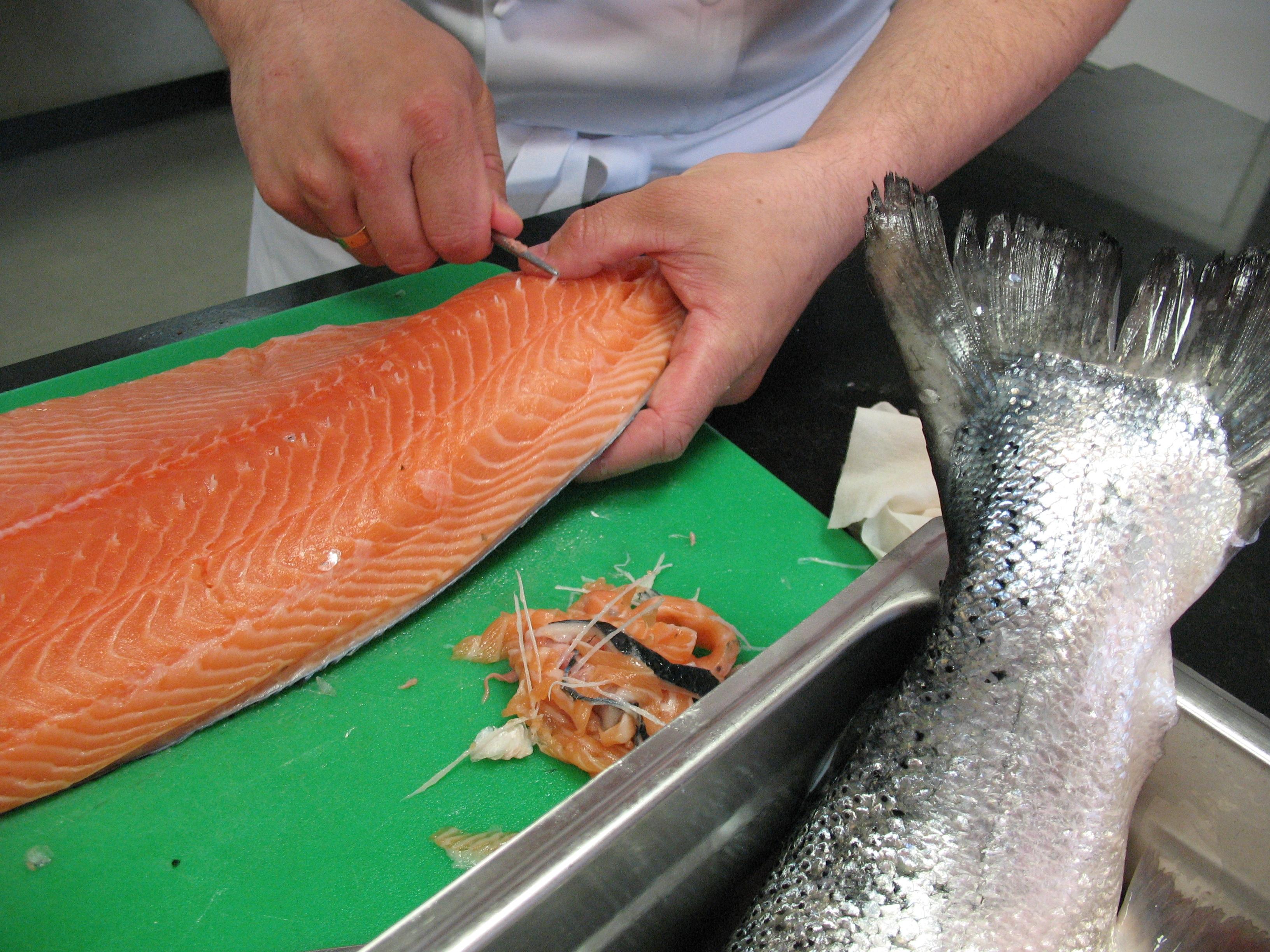 Fotos gratis cocinar vertebrado salm n noruega Cocinar ortigas de mar