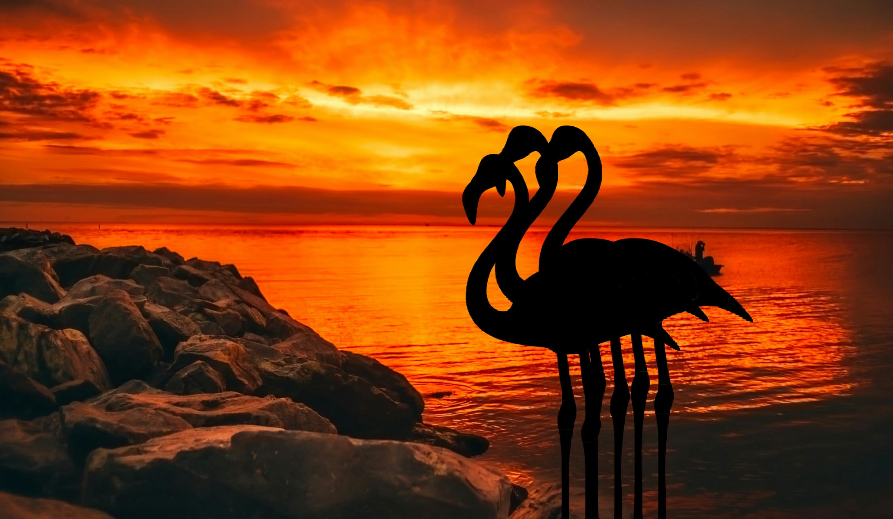 Gambar Senja Matahari Terbenam Roseus Alam Panorama Burung