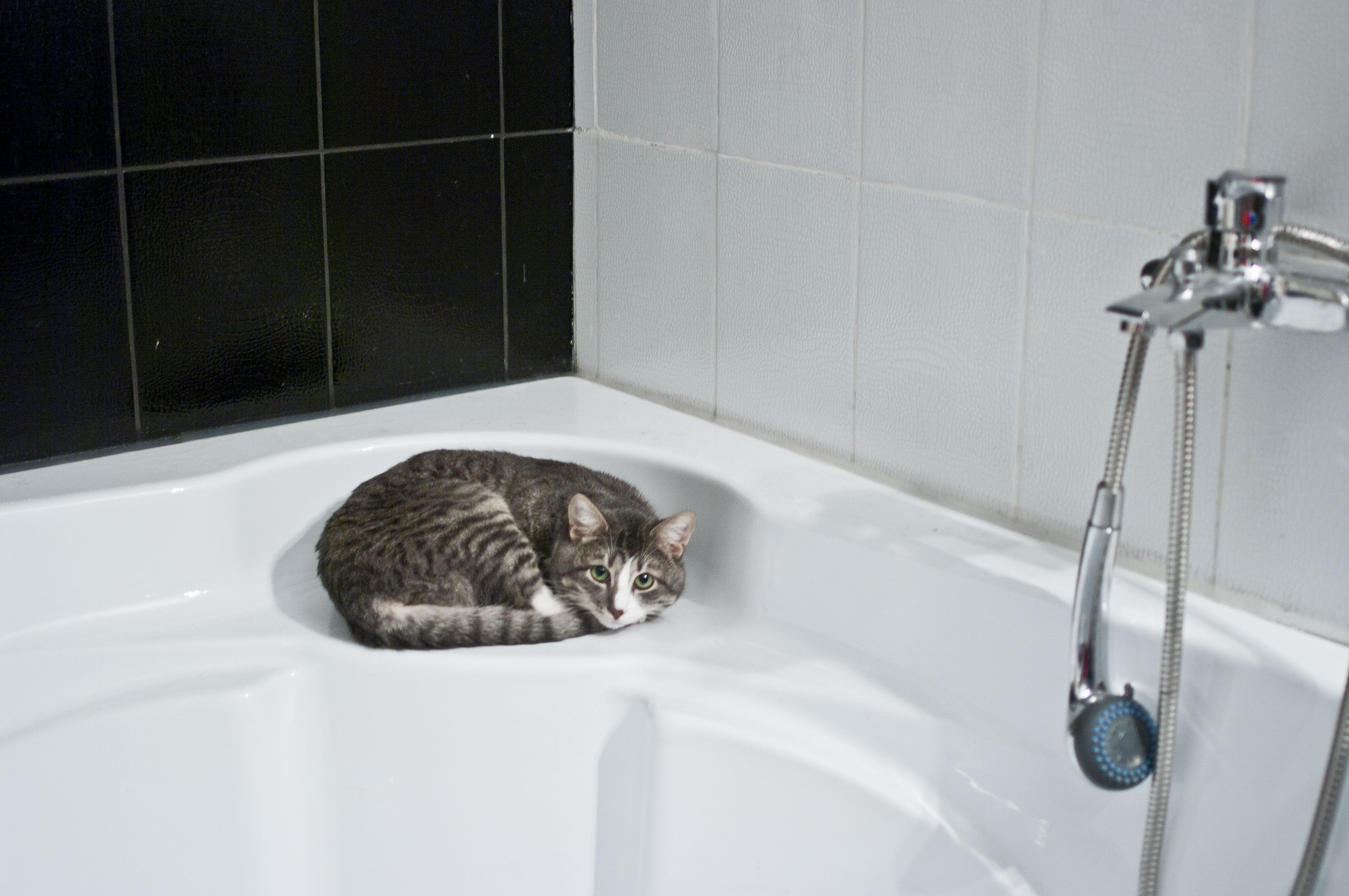 Fotos Gratis Piso Gato Lavabo Habitaci N Ba O Grifo  ~ Como Limpiar La Alcachofa De La Ducha