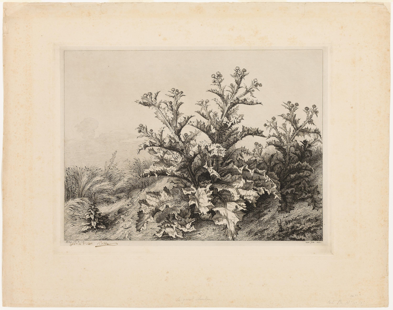 Fotoğraf Bitki örtüsü Ağaç çerçeve çiçek şube Resim Dal