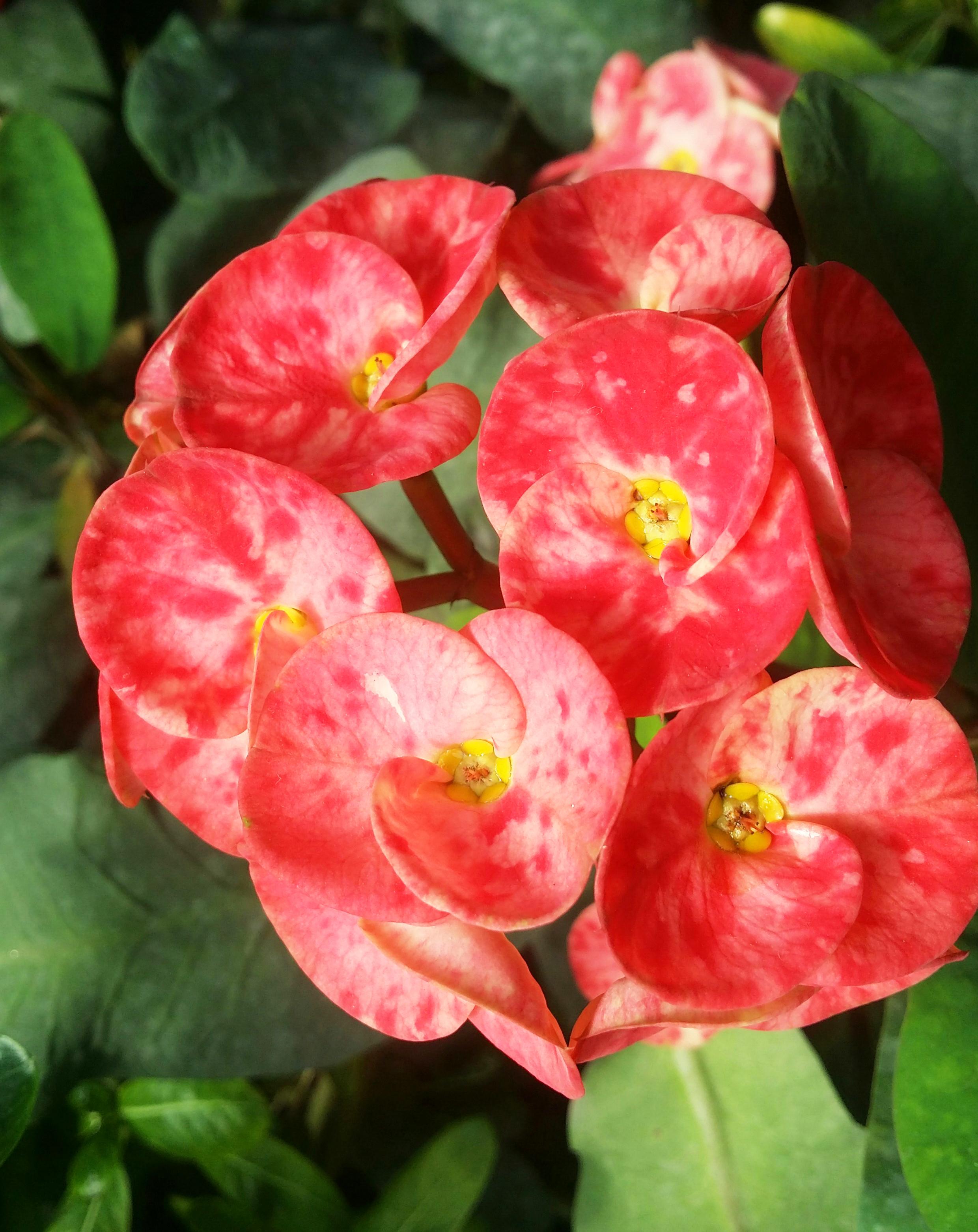 Free Images Floral Nature Background Flower Summer Pattern Colorful Card Spring Decoration Color Art Design Garden Illustration Water