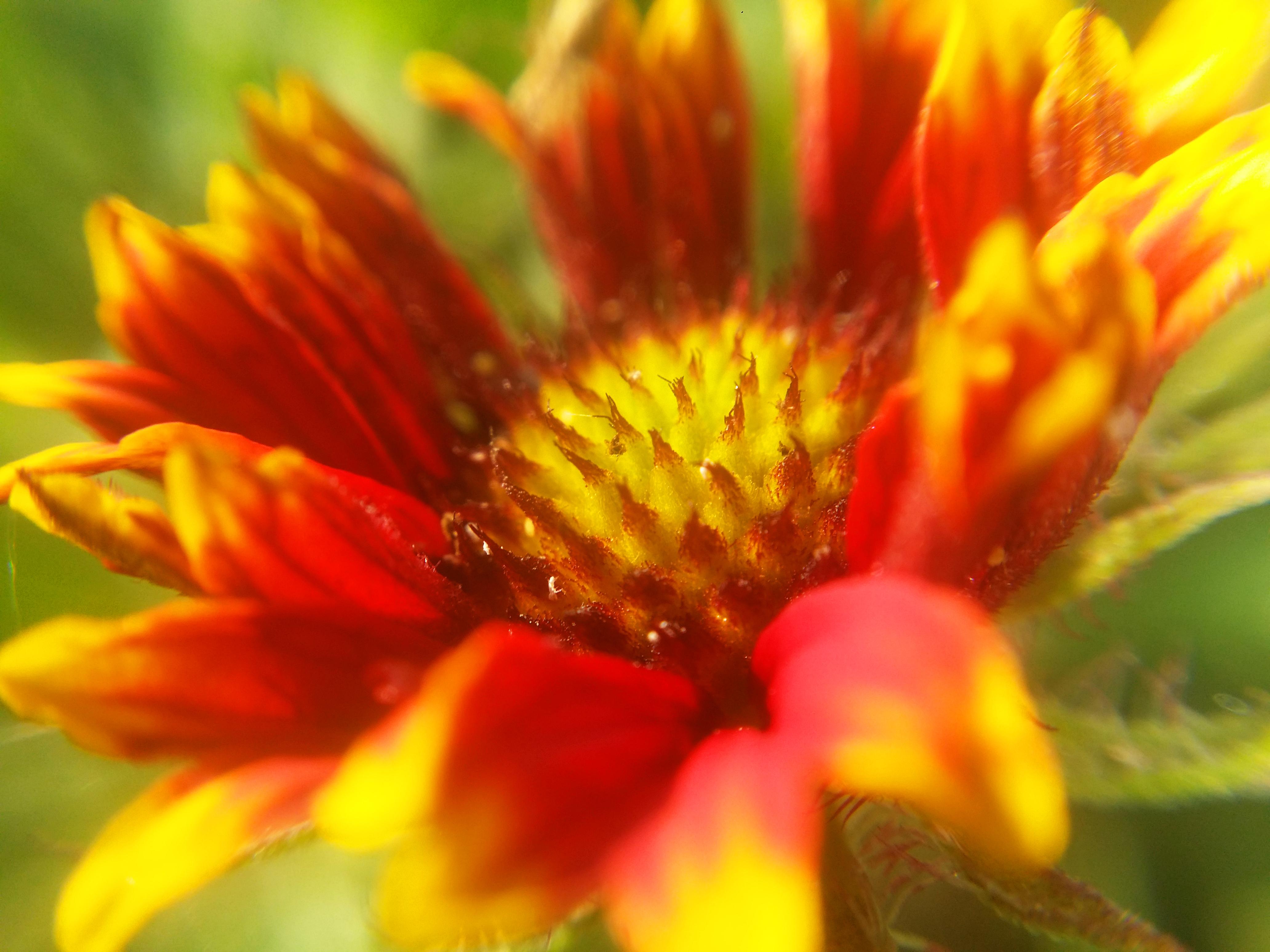 Charmant Kostenlose Foto : Blumen , Natur, Hintergrund, Blume, Sommer , Muster,  Bunt, Karte, Frühling, Dekoration, Farbe, Kunst, Entwurf, Garten,  Illustration, ...
