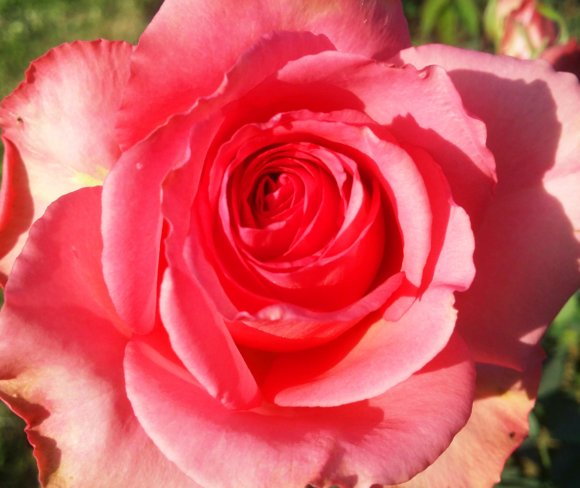 Images Gratuites Floral La Nature Contexte Fleur Ete Modele