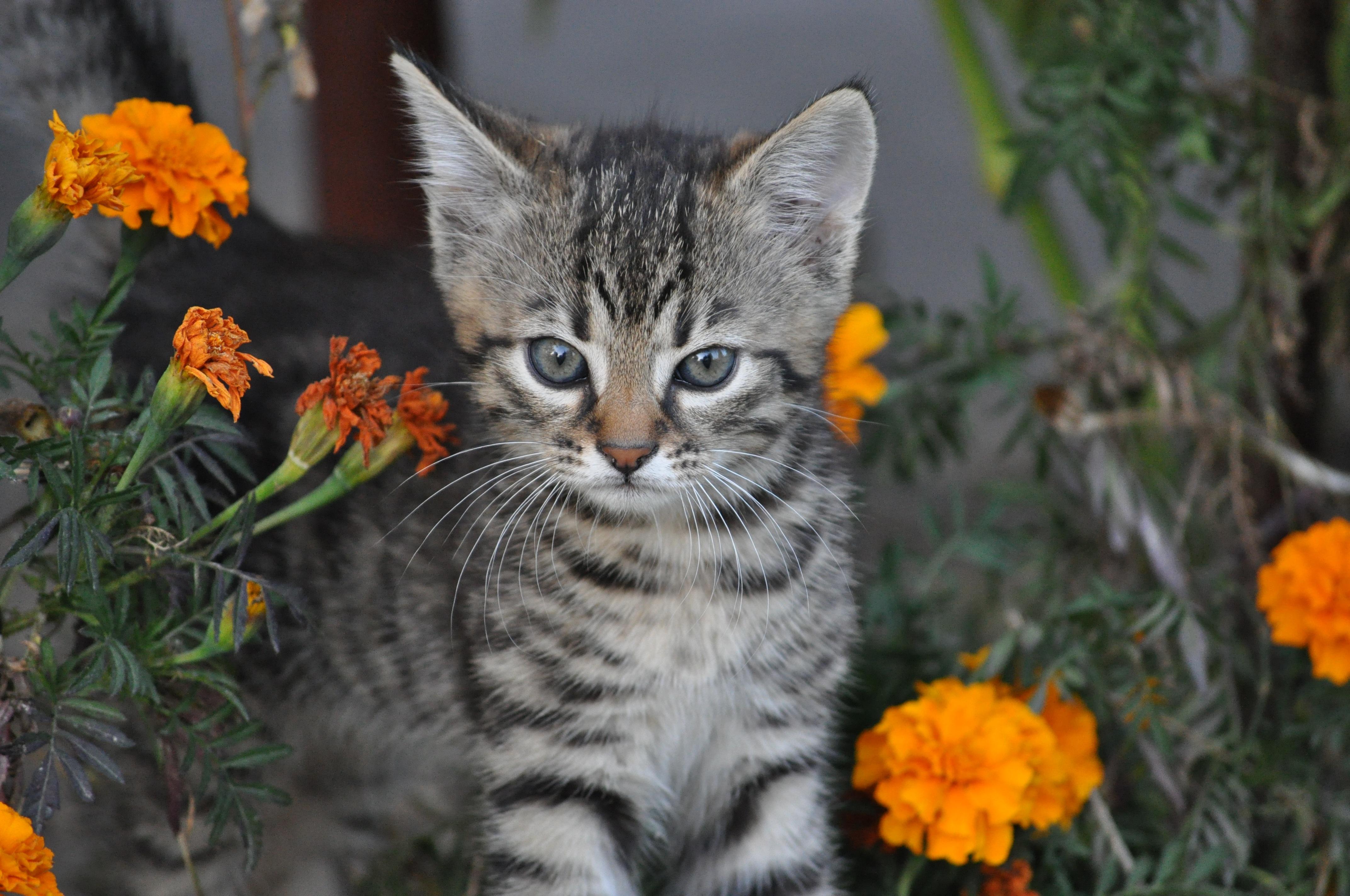 Darmowe Zdjęcia Kwiat Zwierzę Dzikiej Przyrody Futro Fauna