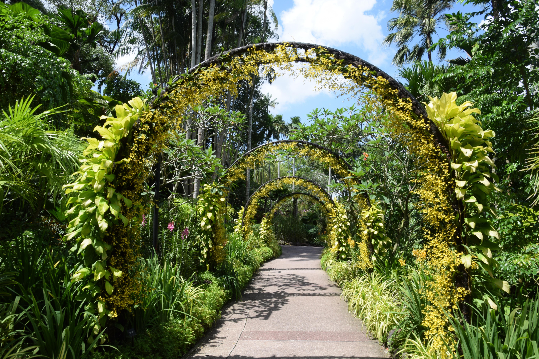 Fotos gratis arco selva botnica flora jardn Botnico