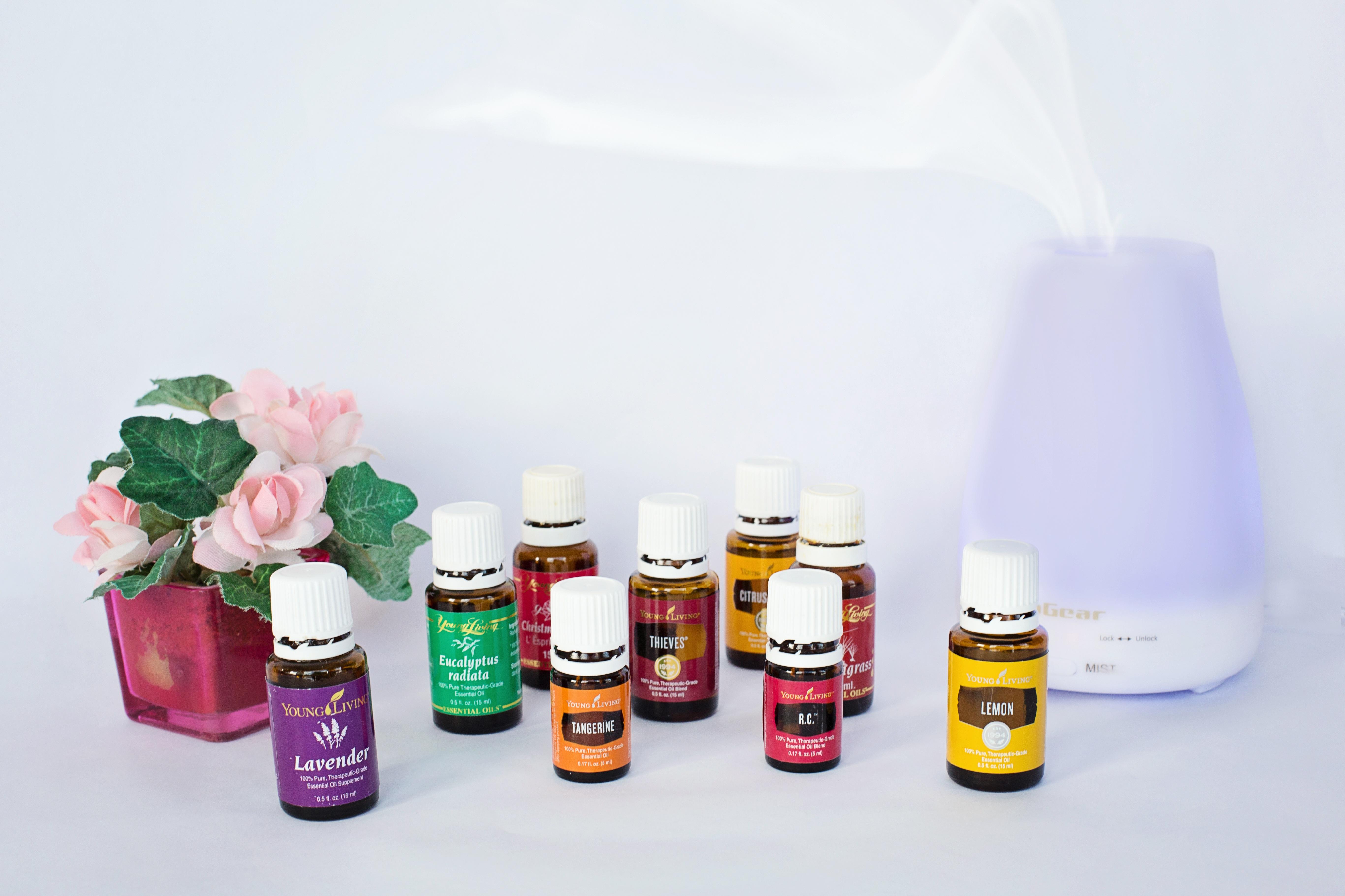 images gratuites : fleur, arôme, couleur, bouteille, mode de vie