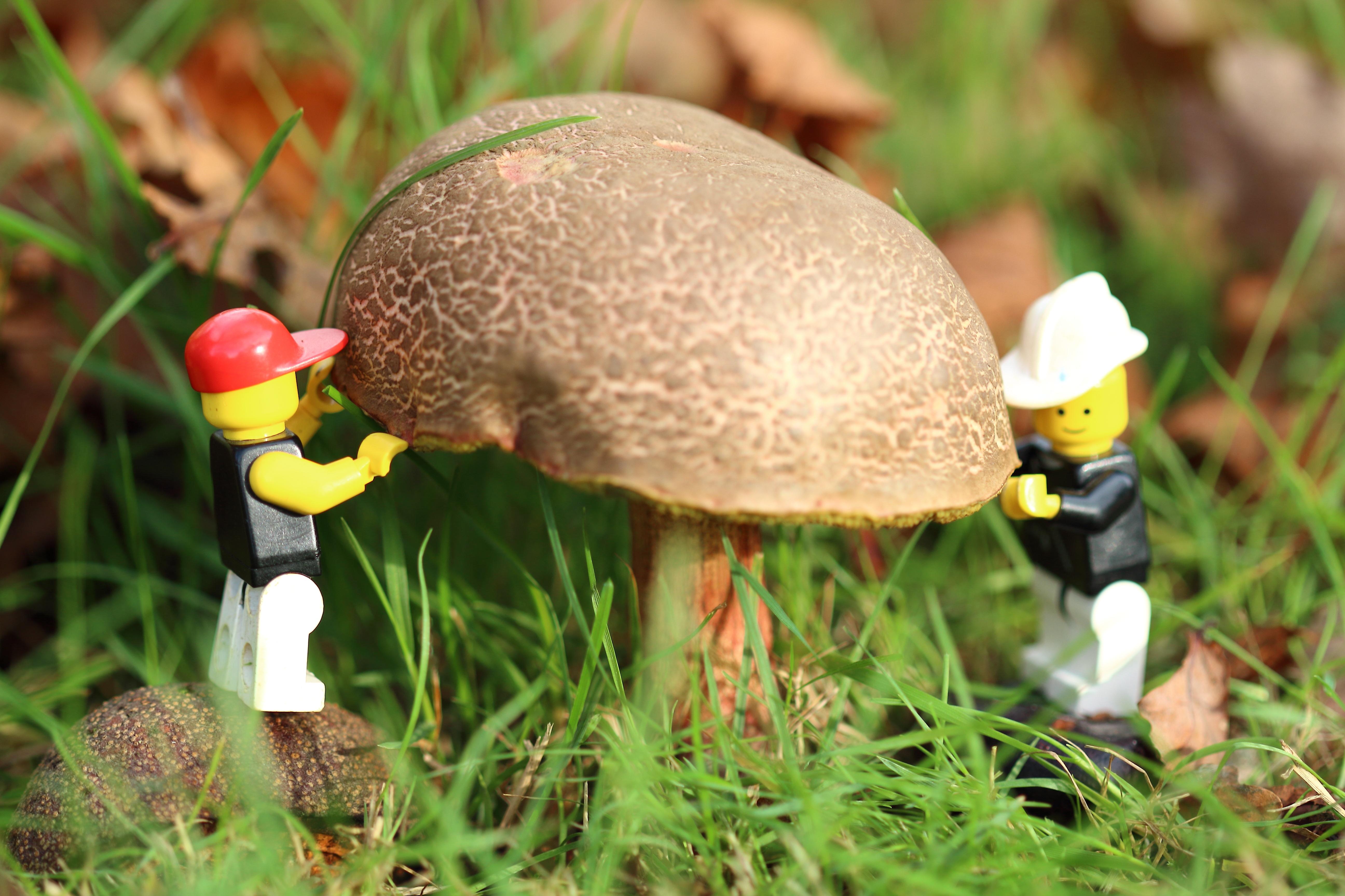 Gratis afbeeldingen bloem herfst paddestoel tuin fauna
