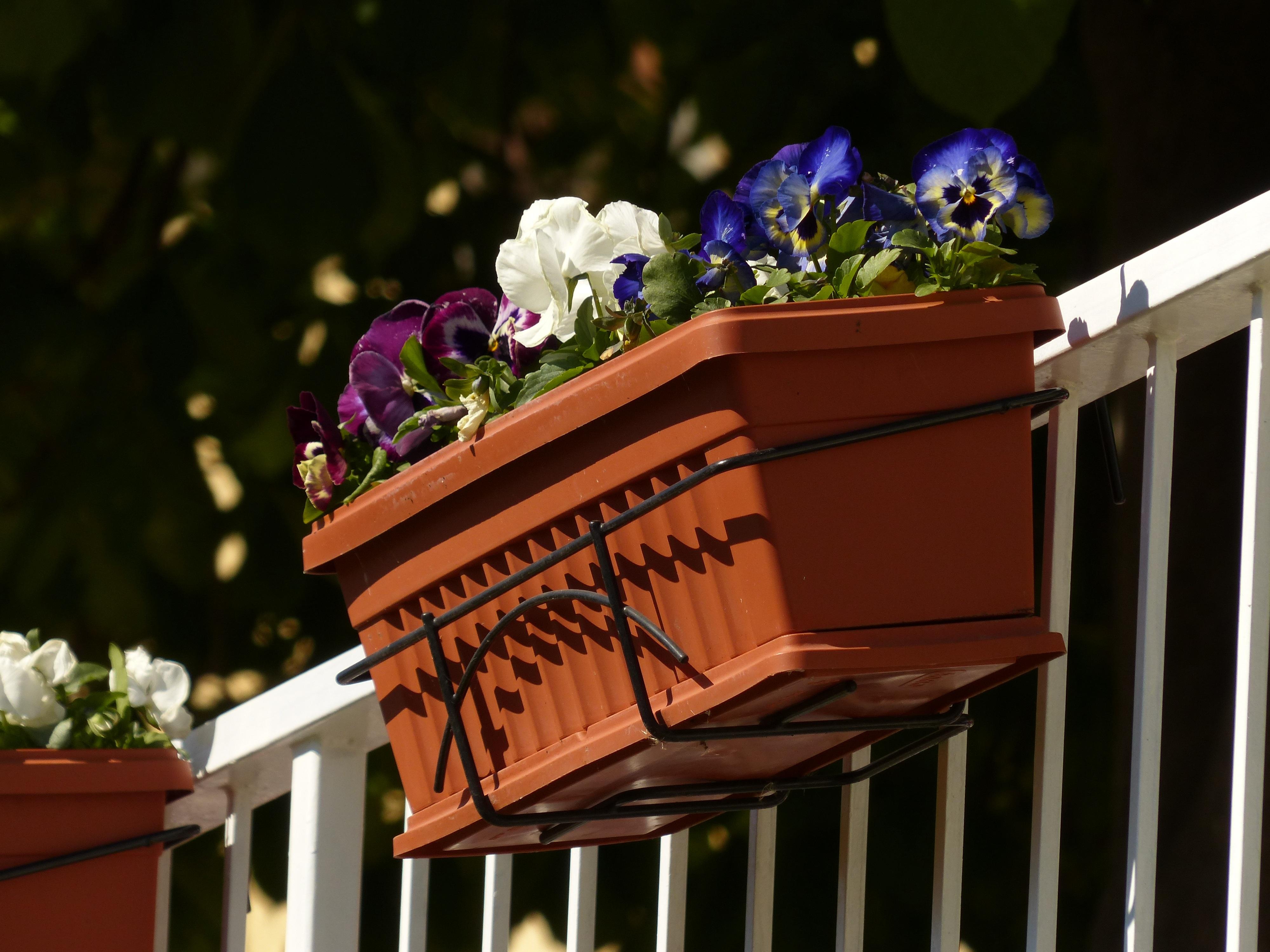 Цветы на балконе в ящиках фото
