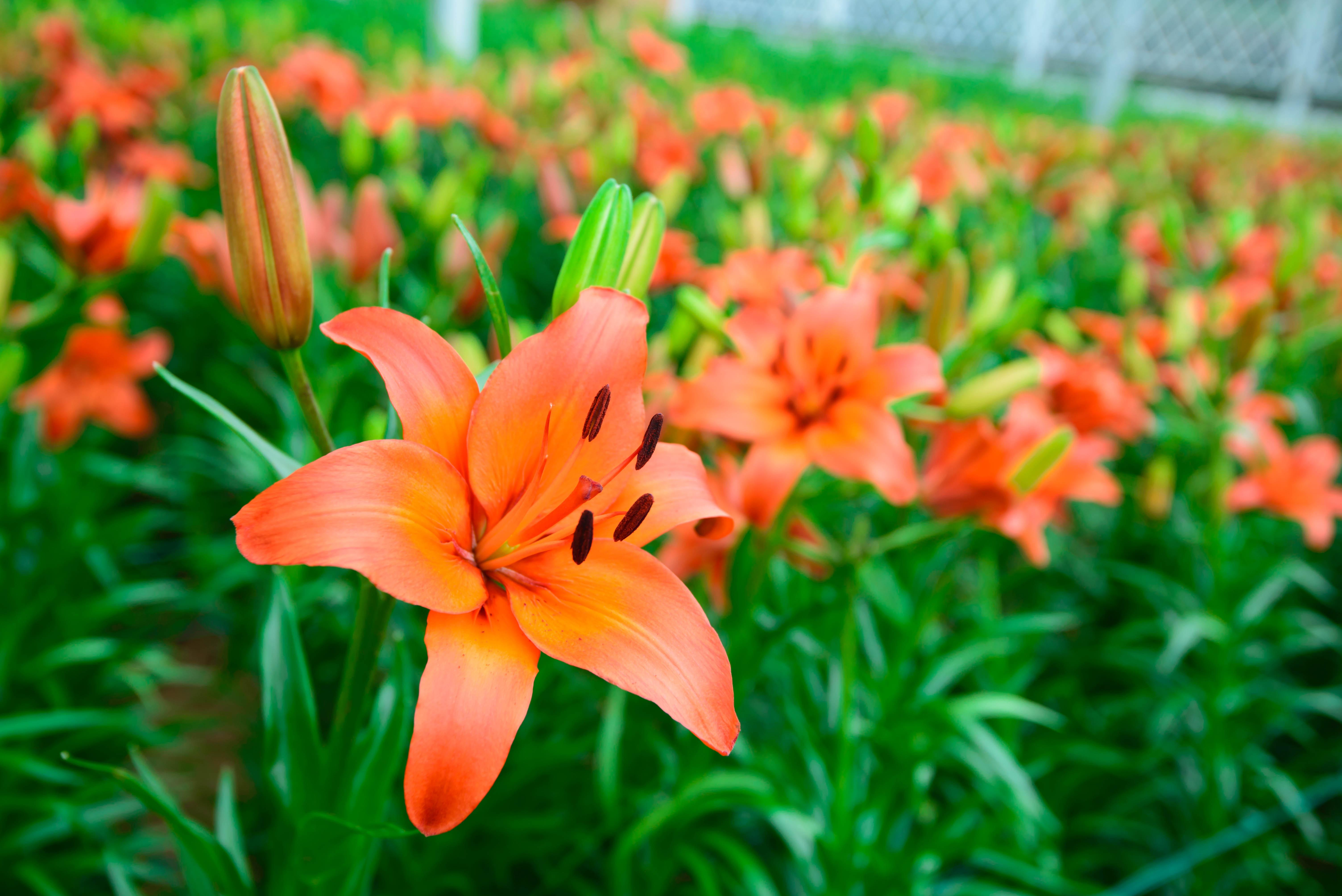 Free Images Beautiful Flower Flower Buds Nature Flower Garden