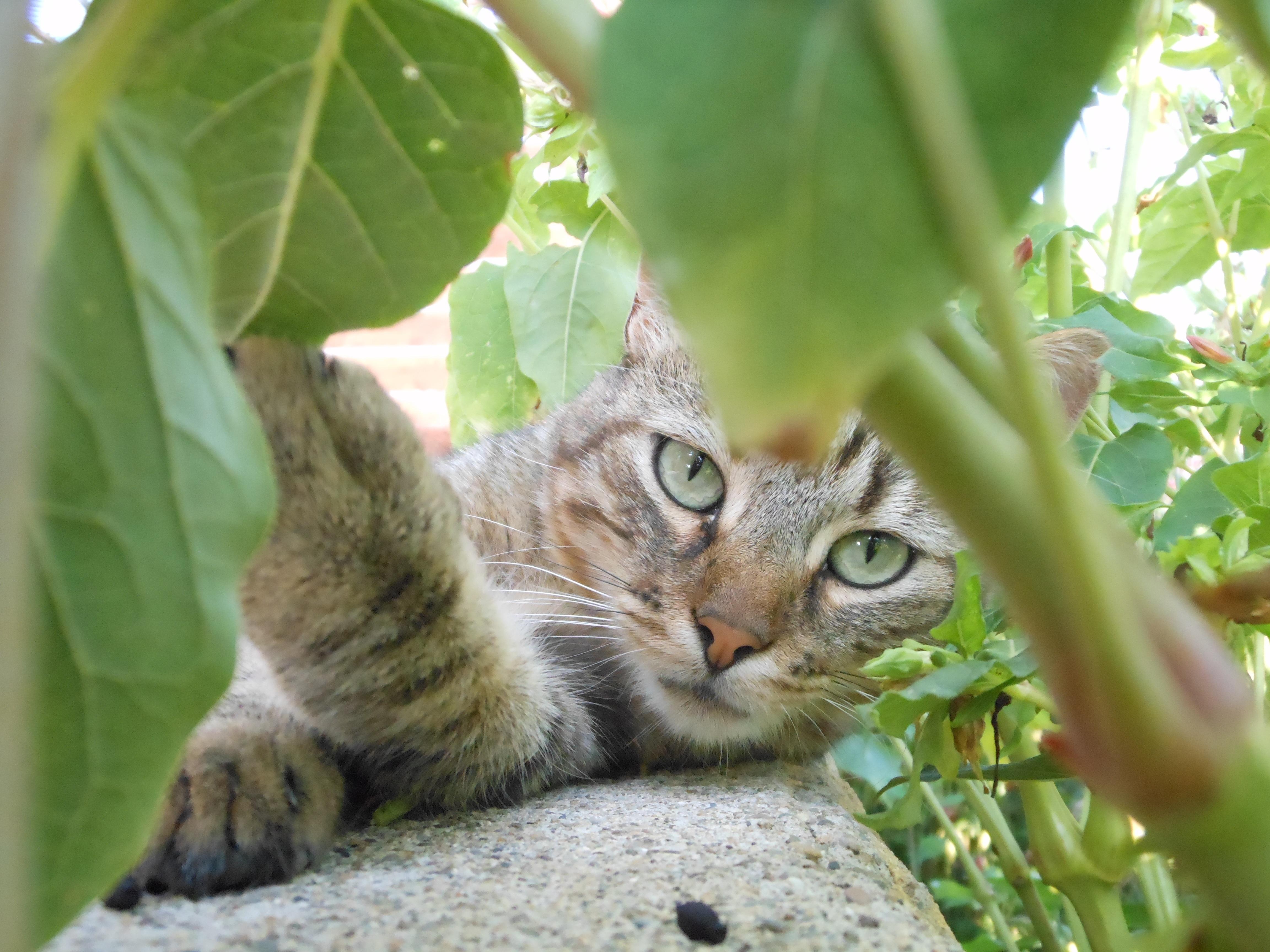 Gambar Kucing Fauna godean.web.id