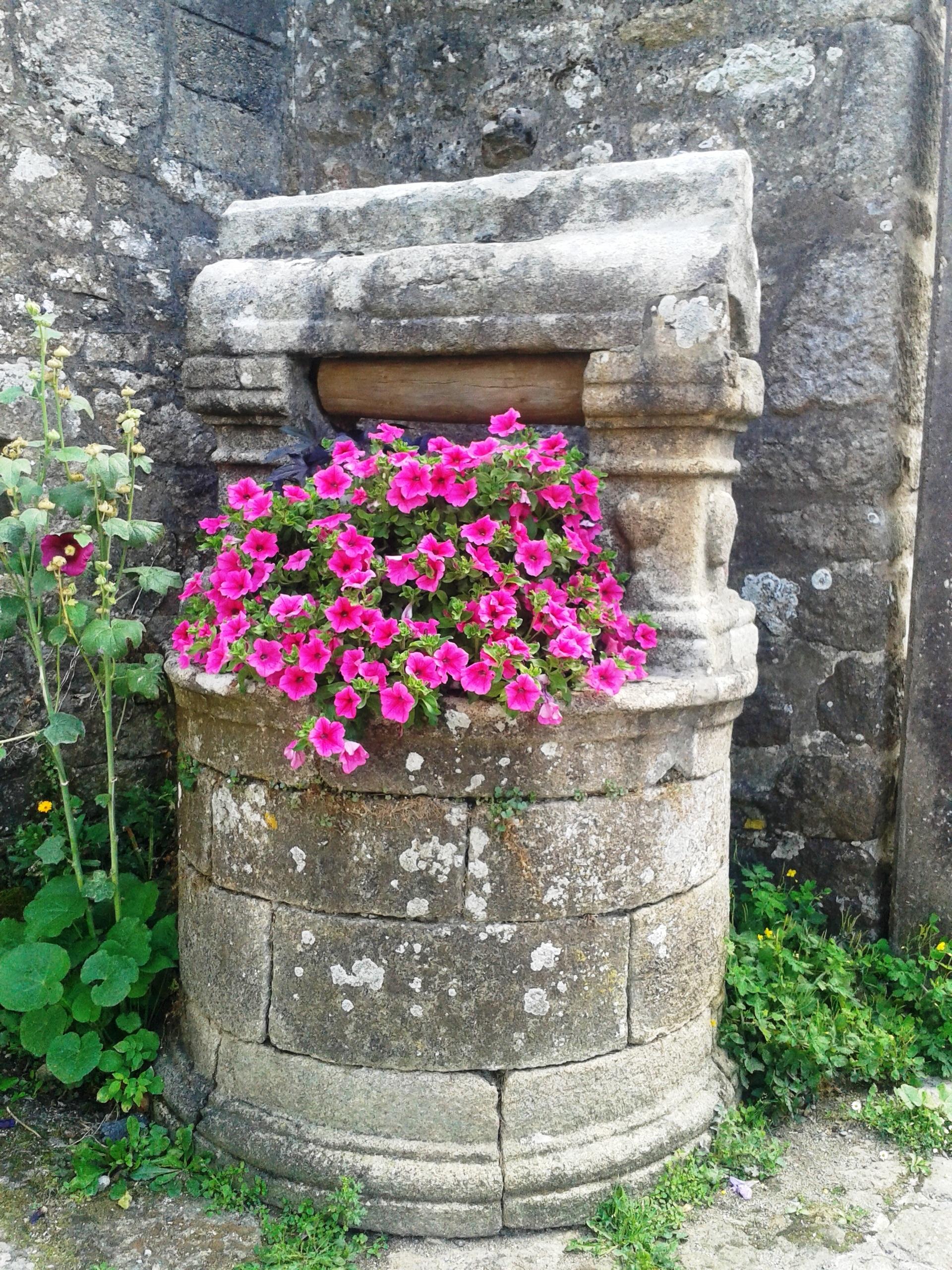 Fotos gratis flor cementerio jard n tumba memorial for Cementerio jardin