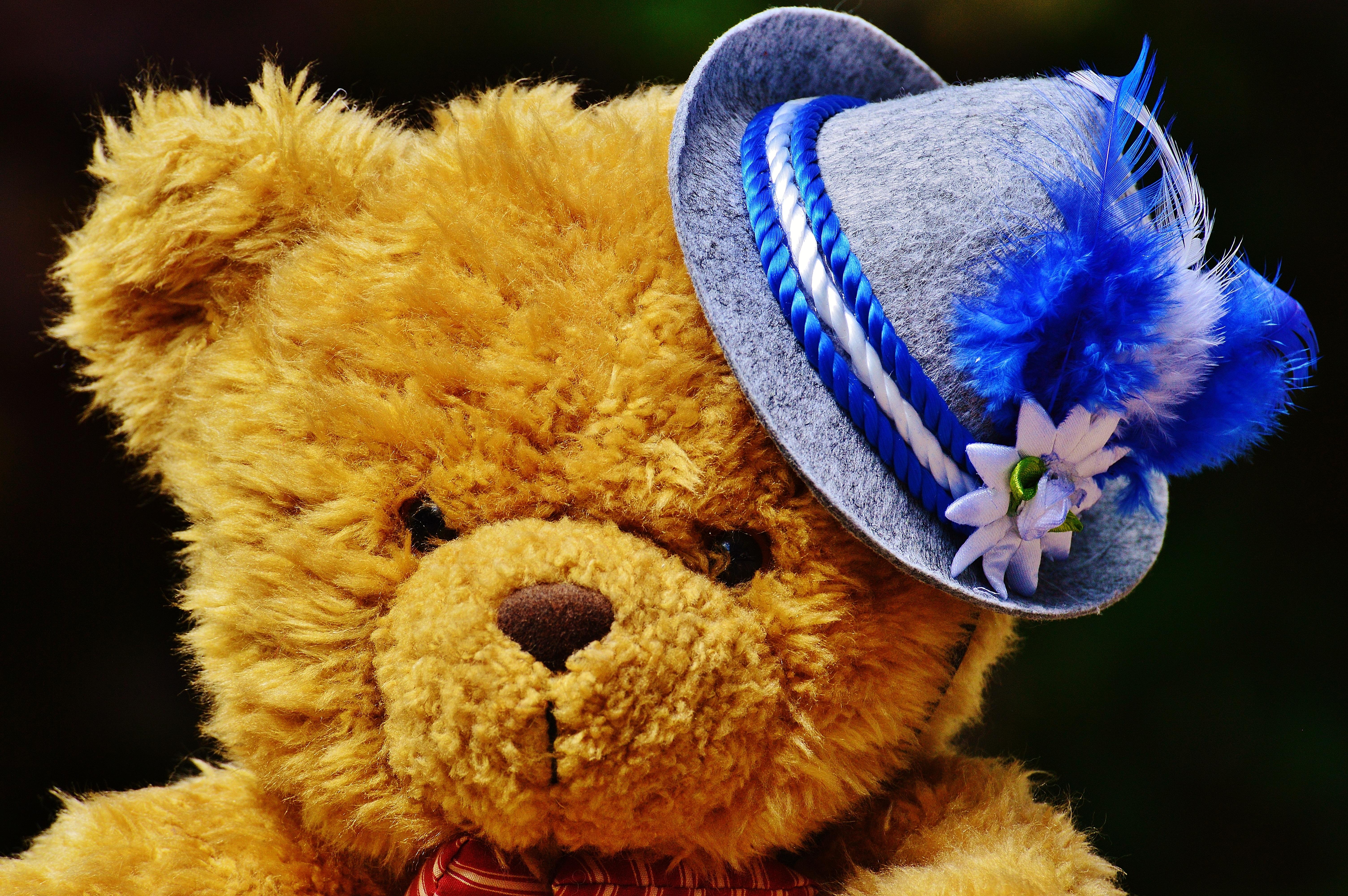 Kostenlose foto : Blume, niedlich, Hut, Spielzeug, Bier, Teddybär ...