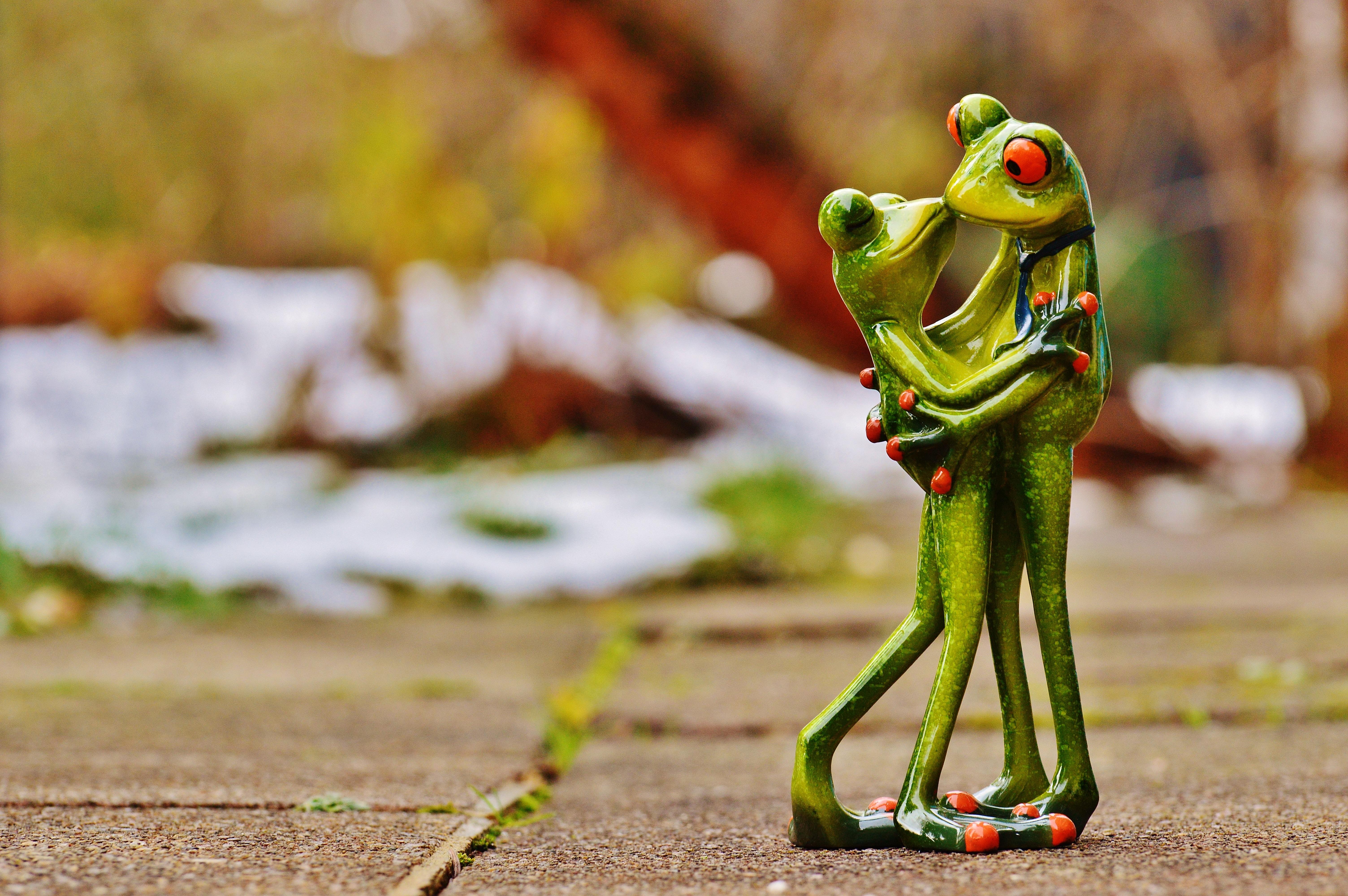 картинки поцеловала жабу сообщили республиканские